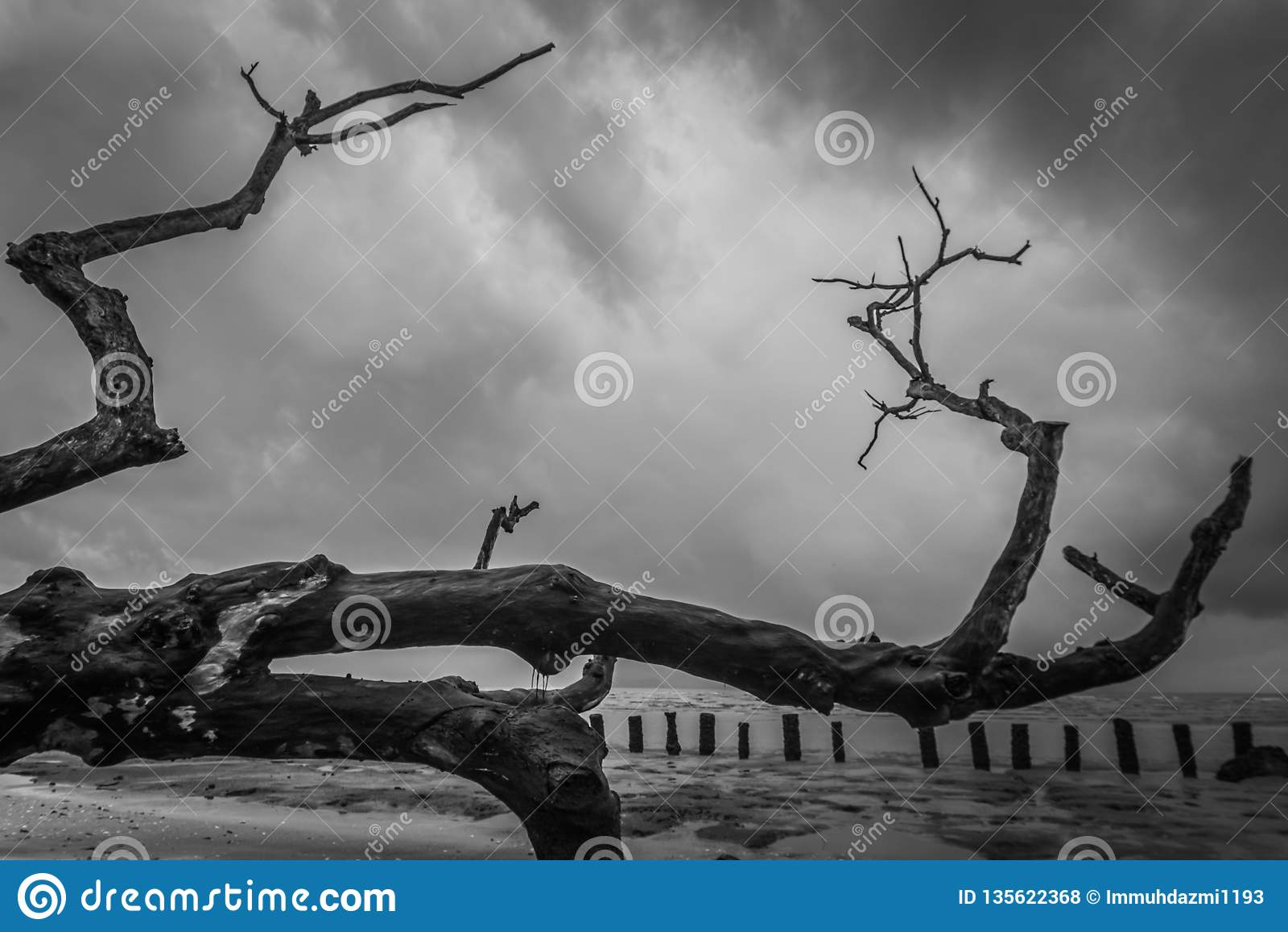 Κλάδος ενός μεγάλου άφυλλου δέντρου