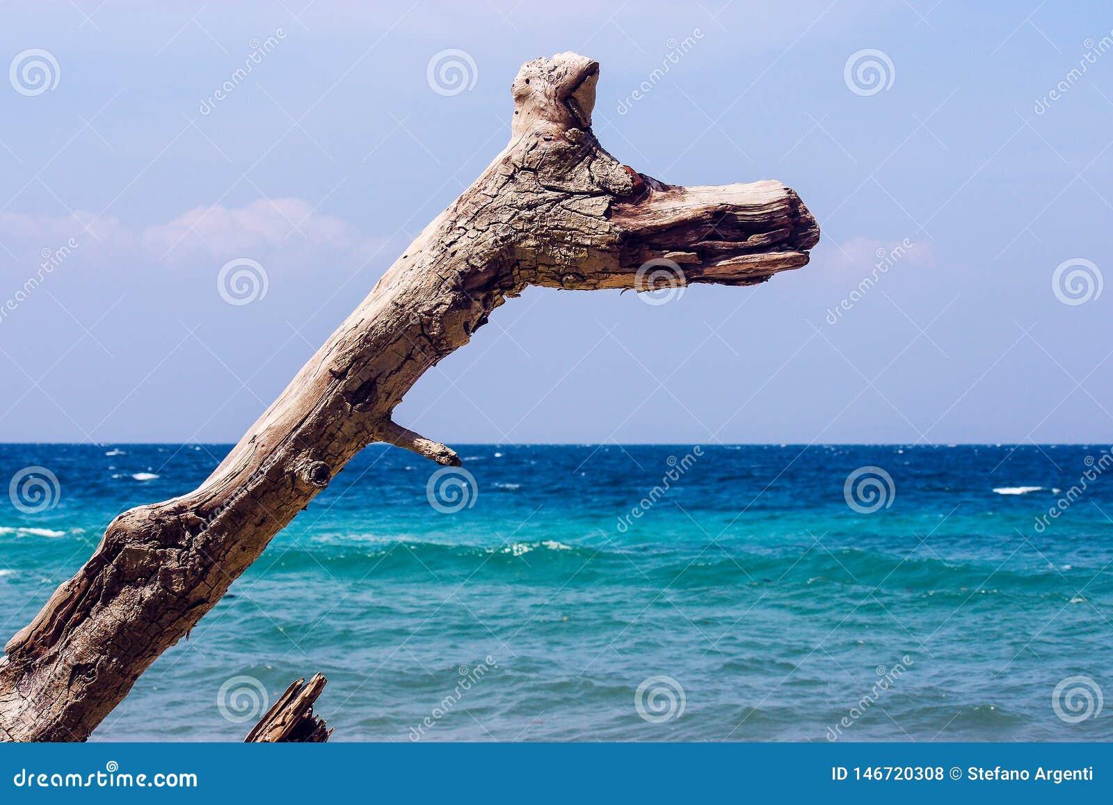 Κλάδος μπροστά από τη θάλασσα