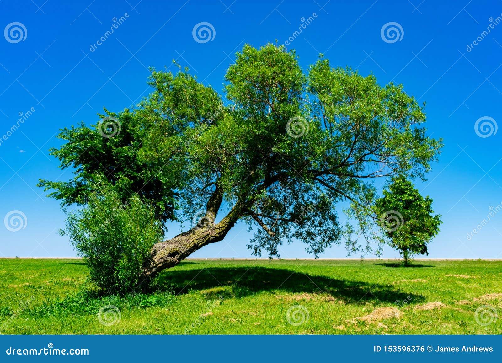 Κλίνοντας δέντρο στην ακτή της λίμνης Μίτσιγκαν