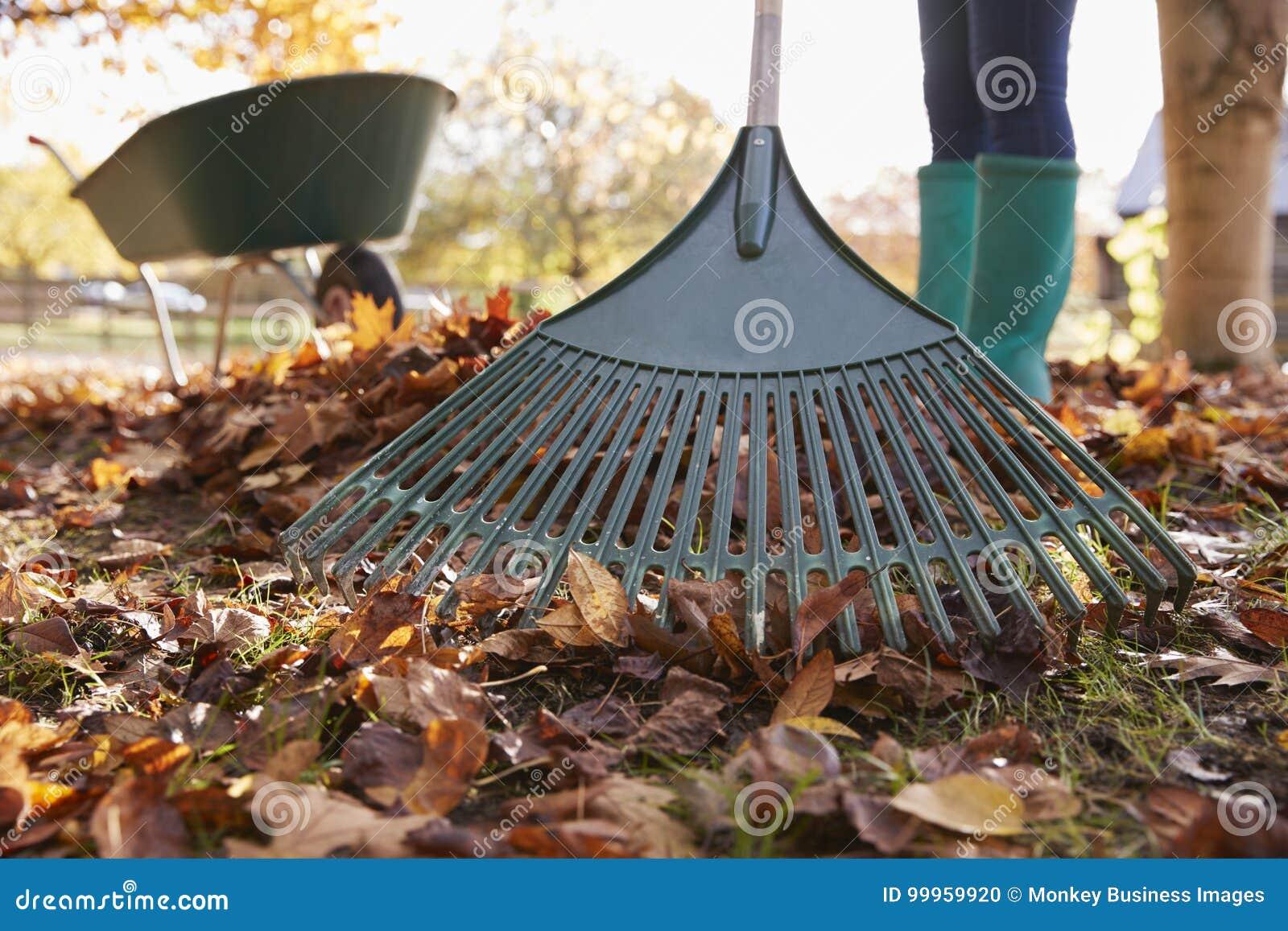 Κλείστε επάνω της γυναίκας που μαζεύει με τη τσουγκράνα τα φύλλα φθινοπώρου στον κήπο