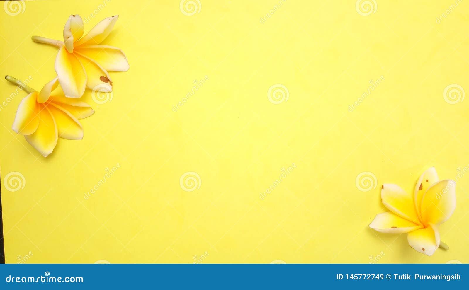 Κλείστε επάνω το κίτρινο υπόβαθρο με Frangipani, σχέδιο στοιχείων για το μήνυμα, απόσπασμα, τοποθέτηση κειμένων πληροφοριών