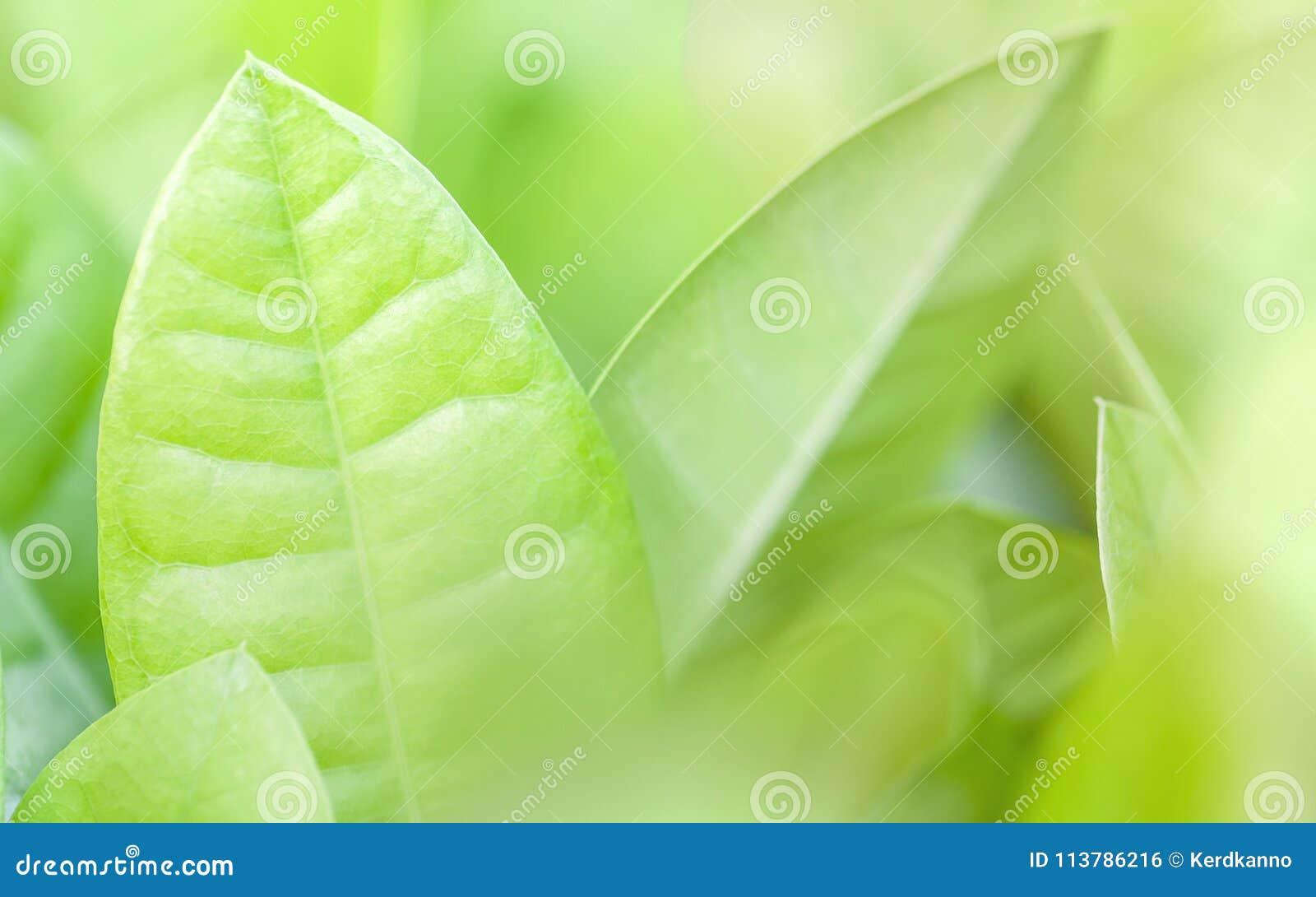 Κλείστε την επάνω και μαλακή εστίαση των πράσινων φύλλων πράσινη φύση ανασκόπησης