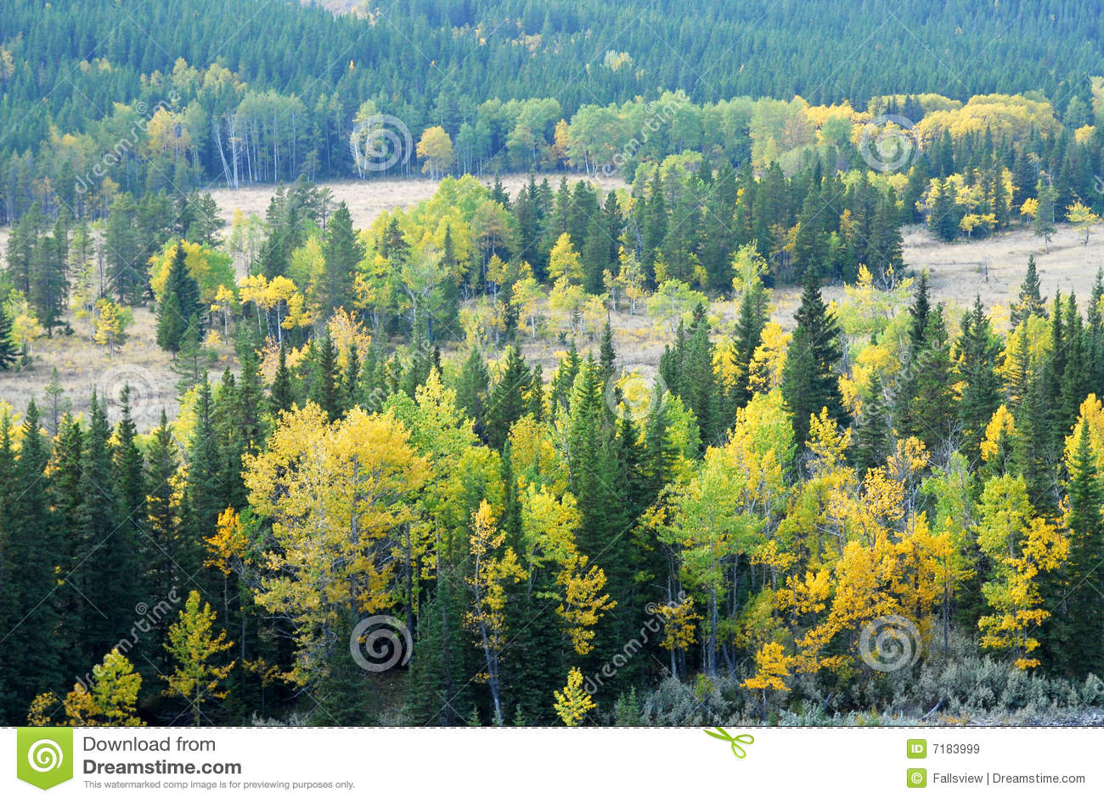 κοιλάδα ποταμών δασών