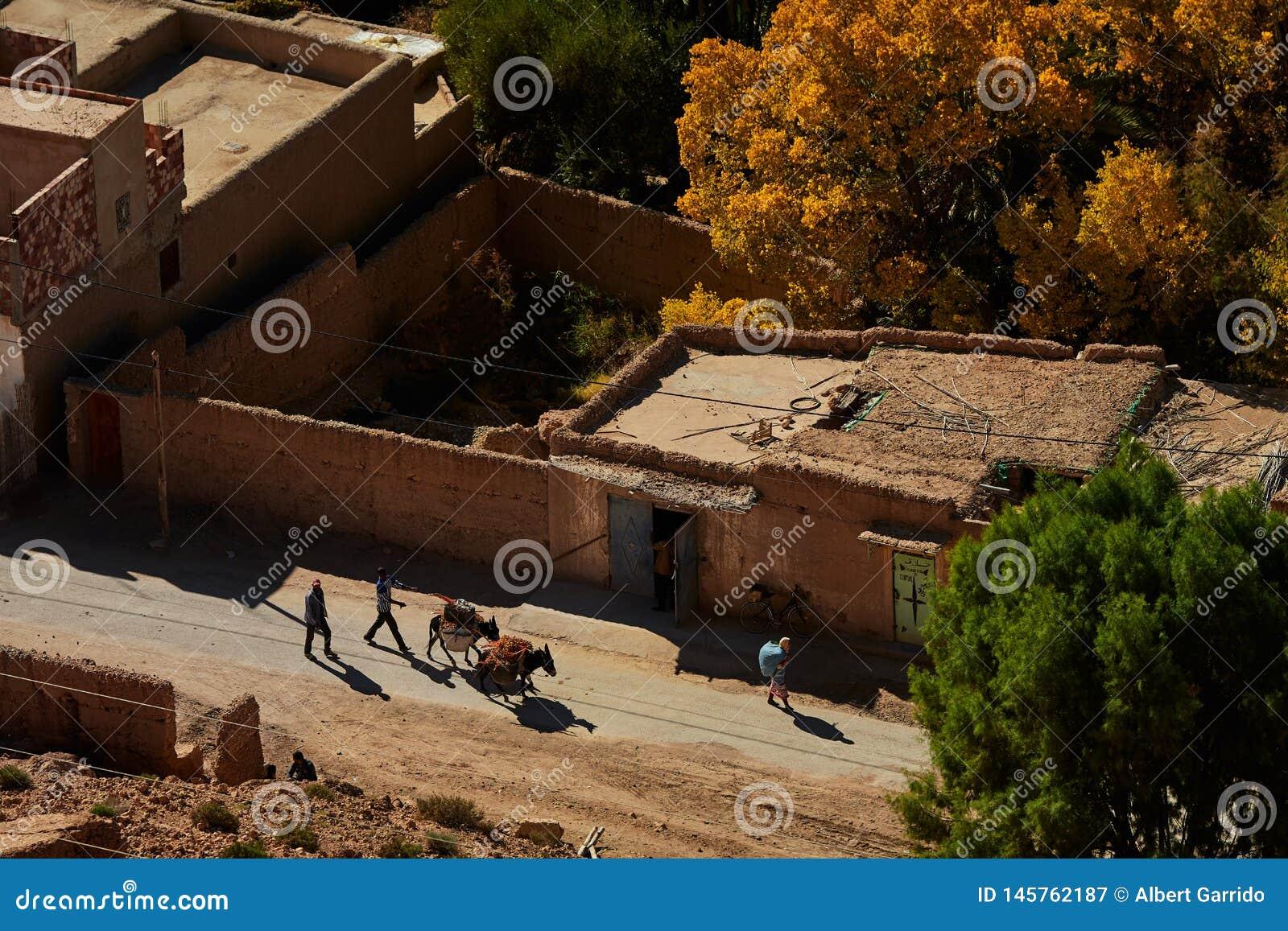 Κοιλάδα Ziz, Moroco - 3 Δεκεμβρίου 2018: Μεταφορά γαιδάρων