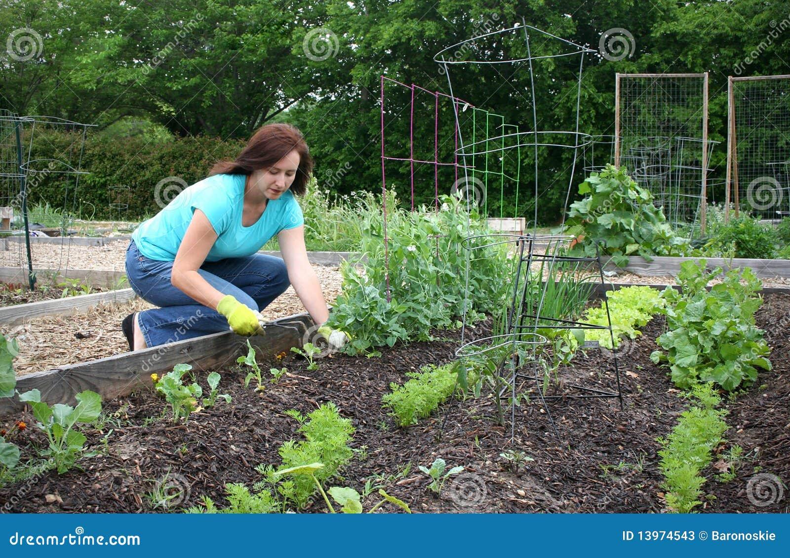 κοινοτική κηπουρική
