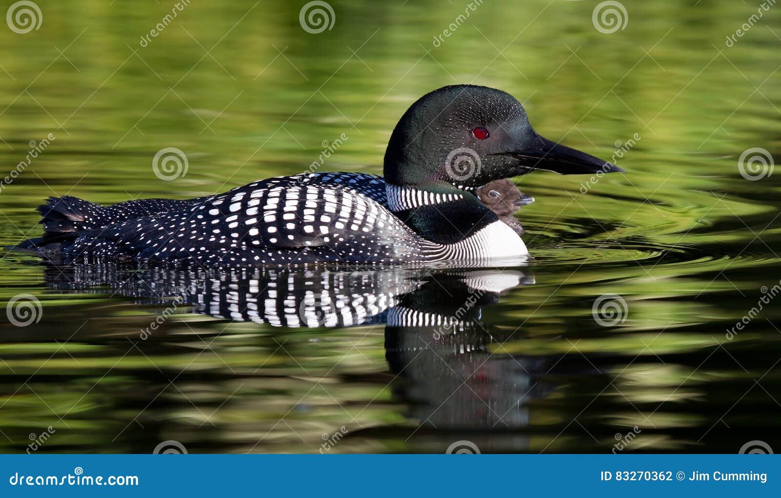 Cumming πουλί εικόνες