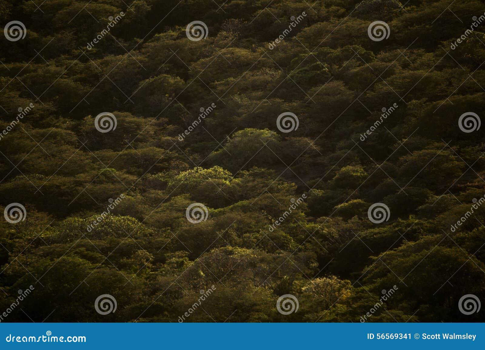 Download Κοιλάδα κατωτέρω, Νικαράγουα Στοκ Εικόνα - εικόνα από δέντρα, δέντρο: 56569341