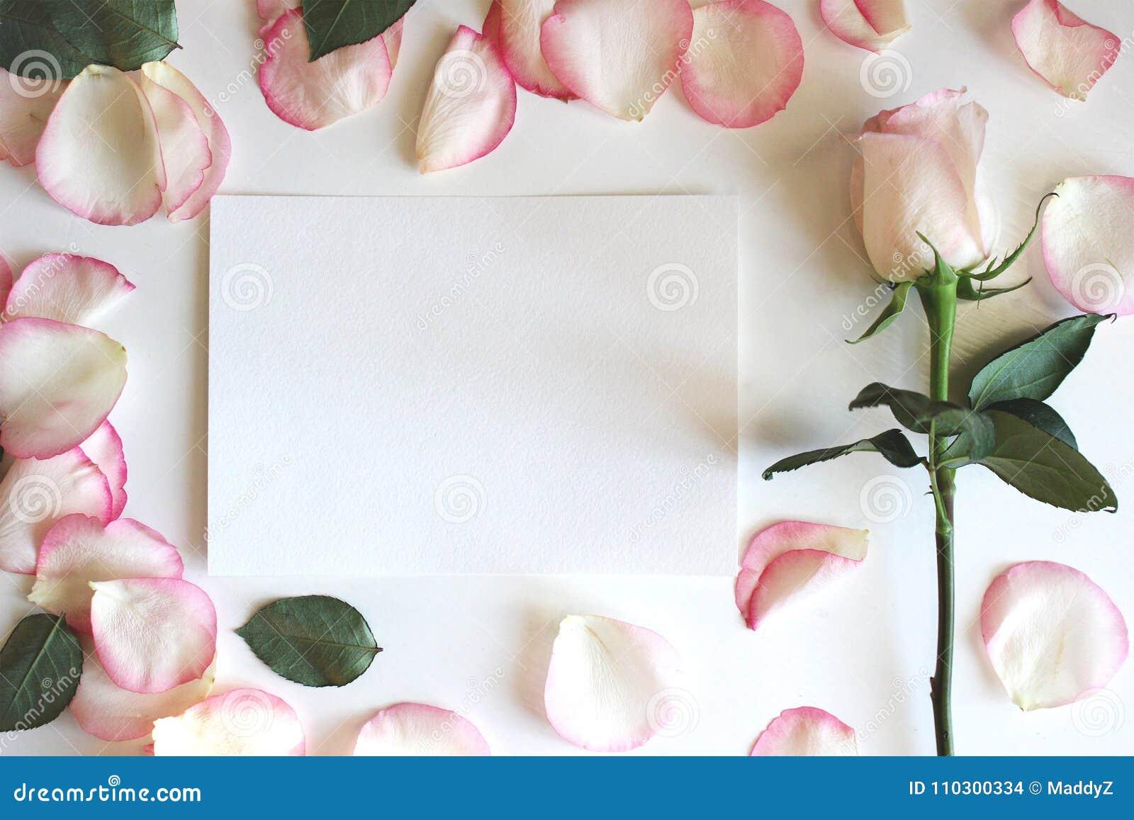 Κοκκινίστε ρόδινος αυξήθηκε και πέταλα Οριζόντιο κενό πρότυπο εγγράφου Γάμος, ρομαντικό πρότυπο Το υπόβαθρο, επίπεδο βάζει, πρότυ