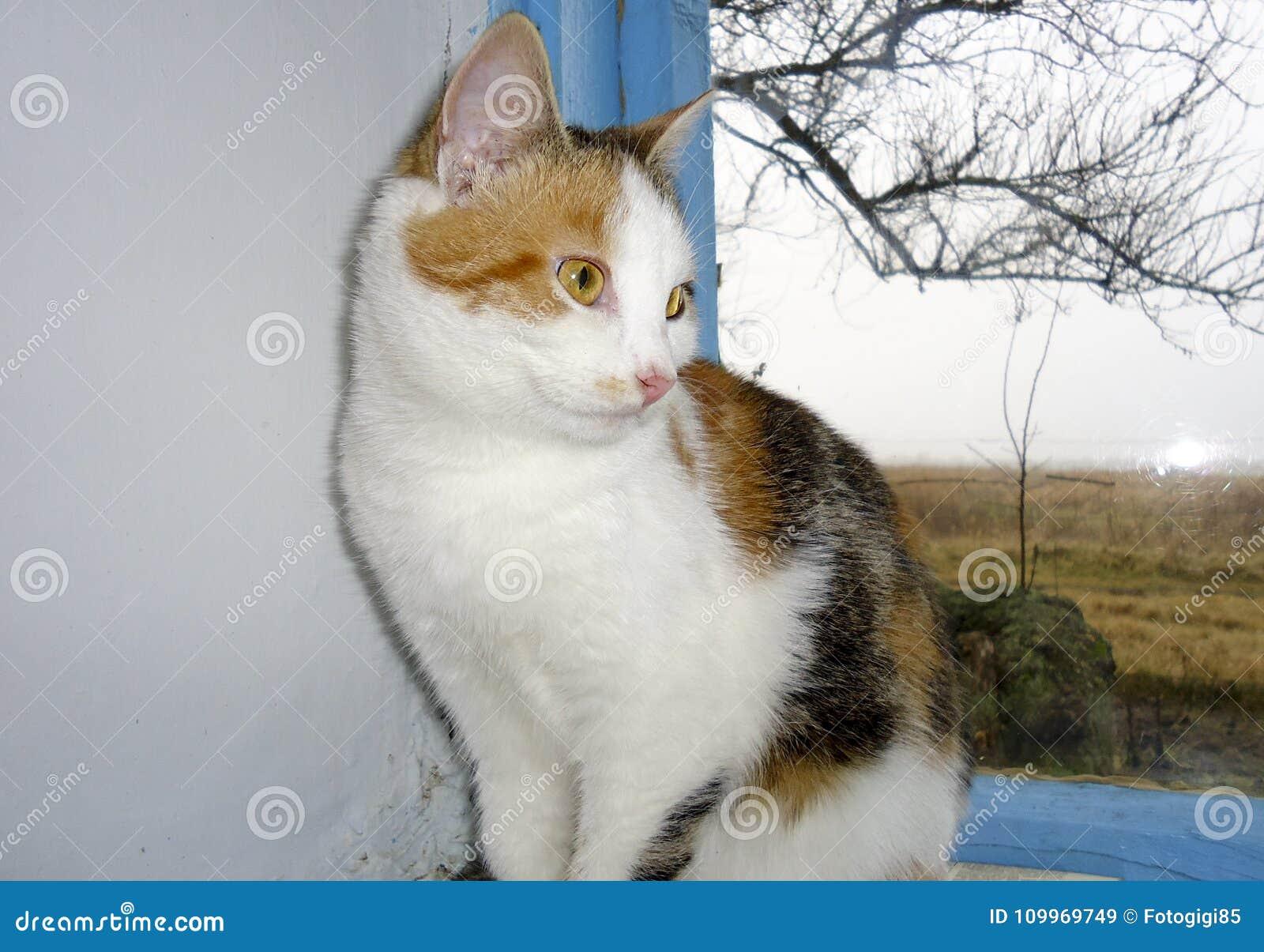 5ebaac865476 Κοκκινομάλλης γάτα