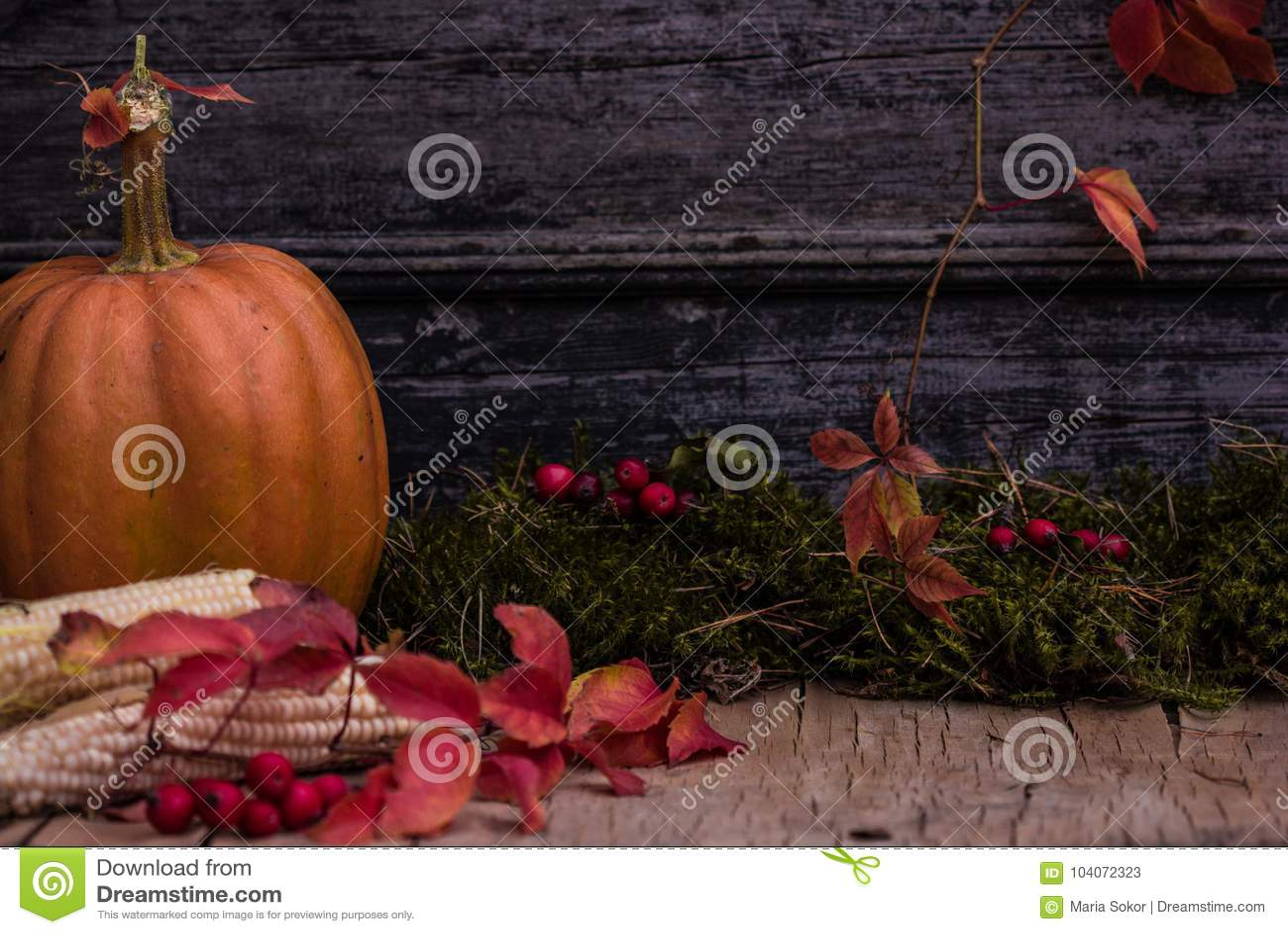 Κολοκύθα, κολοκύνθη Ευτυχής ανασκόπηση ημέρας των ευχαριστιών Κολοκύθες ημέρας των ευχαριστιών φθινοπώρου πέρα από το ξύλινο υπόβ
