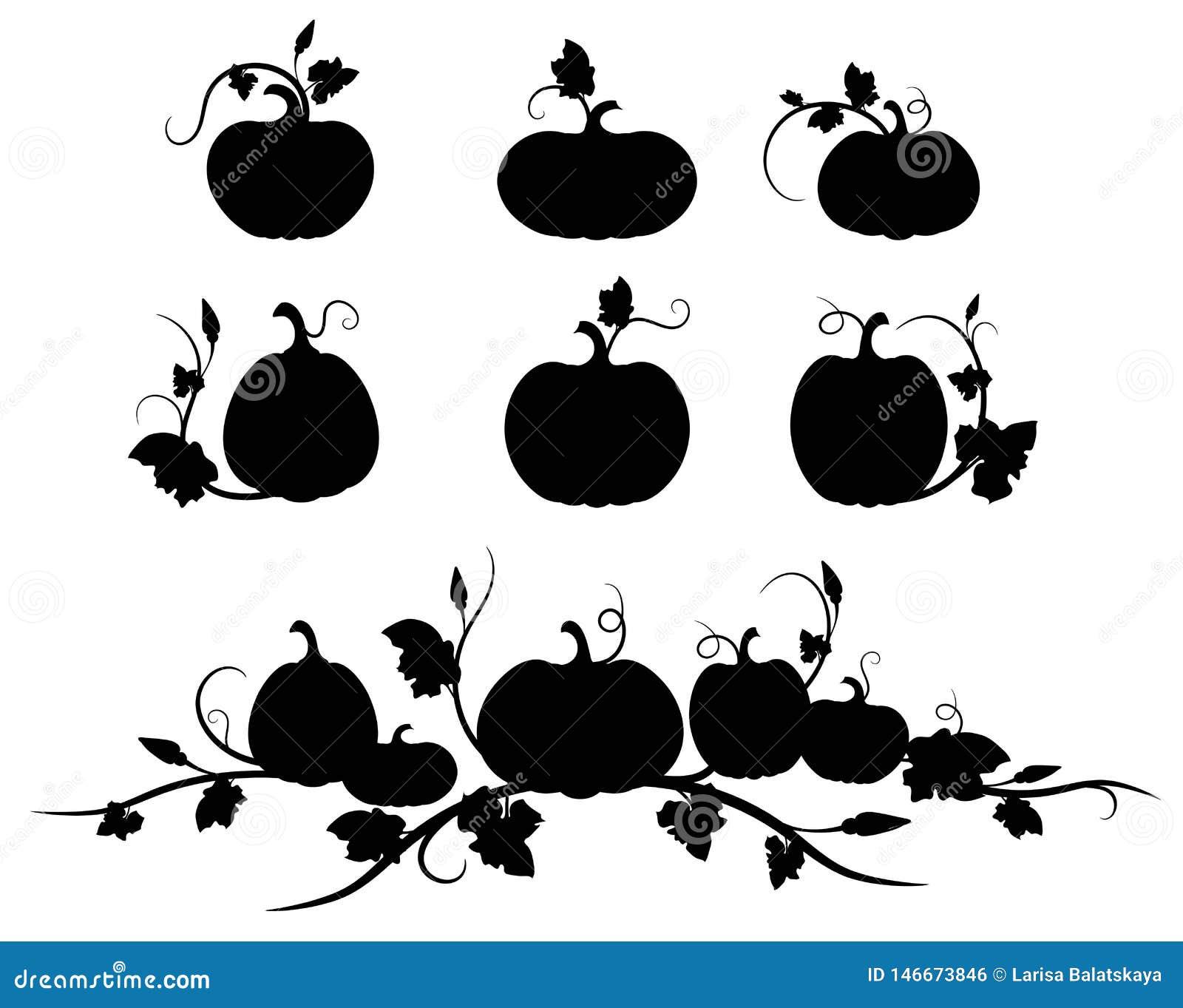 Κολοκύθα Μαύρη σκιαγραφία Απομονωμένο λαχανικό, φύλλα, λουλούδι και σπόροι σκιαγραφιών