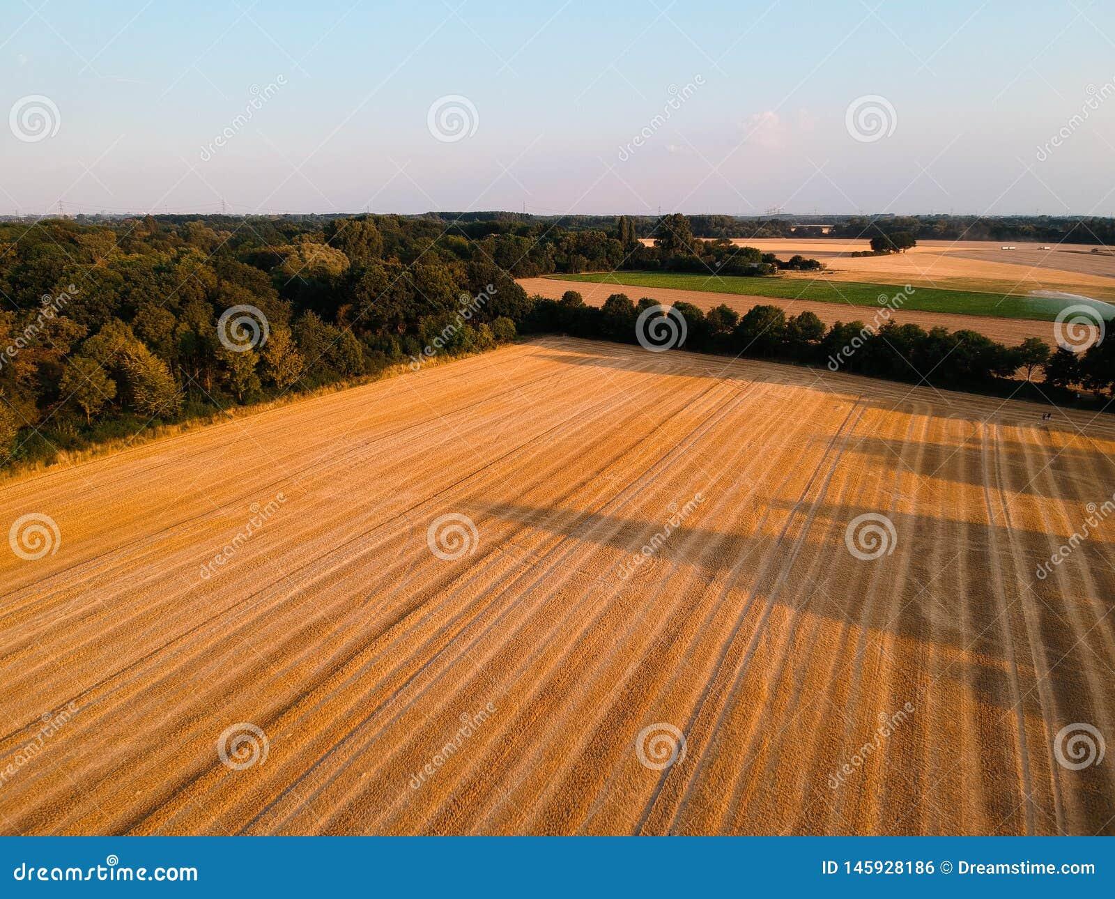 Κομμένος τομέας στη Γερμανία με το συμπαθητικό μπλε ουρανό και δέντρα στο υπόβαθρο