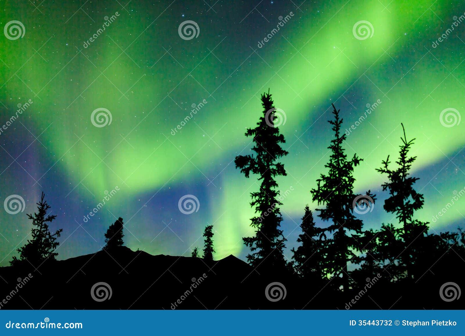 Κομψά βόρεια borealis αυγής φω των taiga Yukon