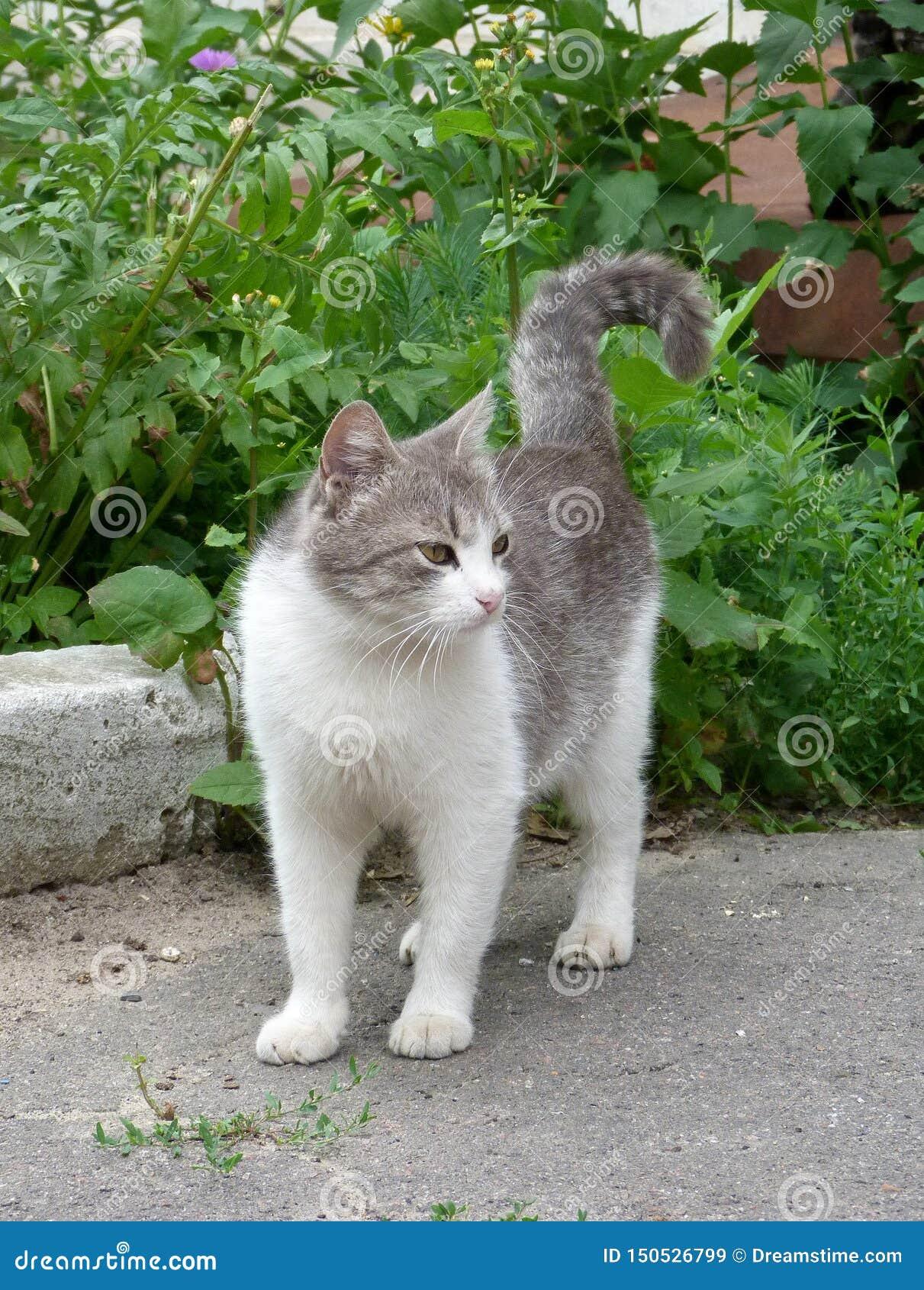 Κομψή γάτα με τα στραβισμένα μάτια