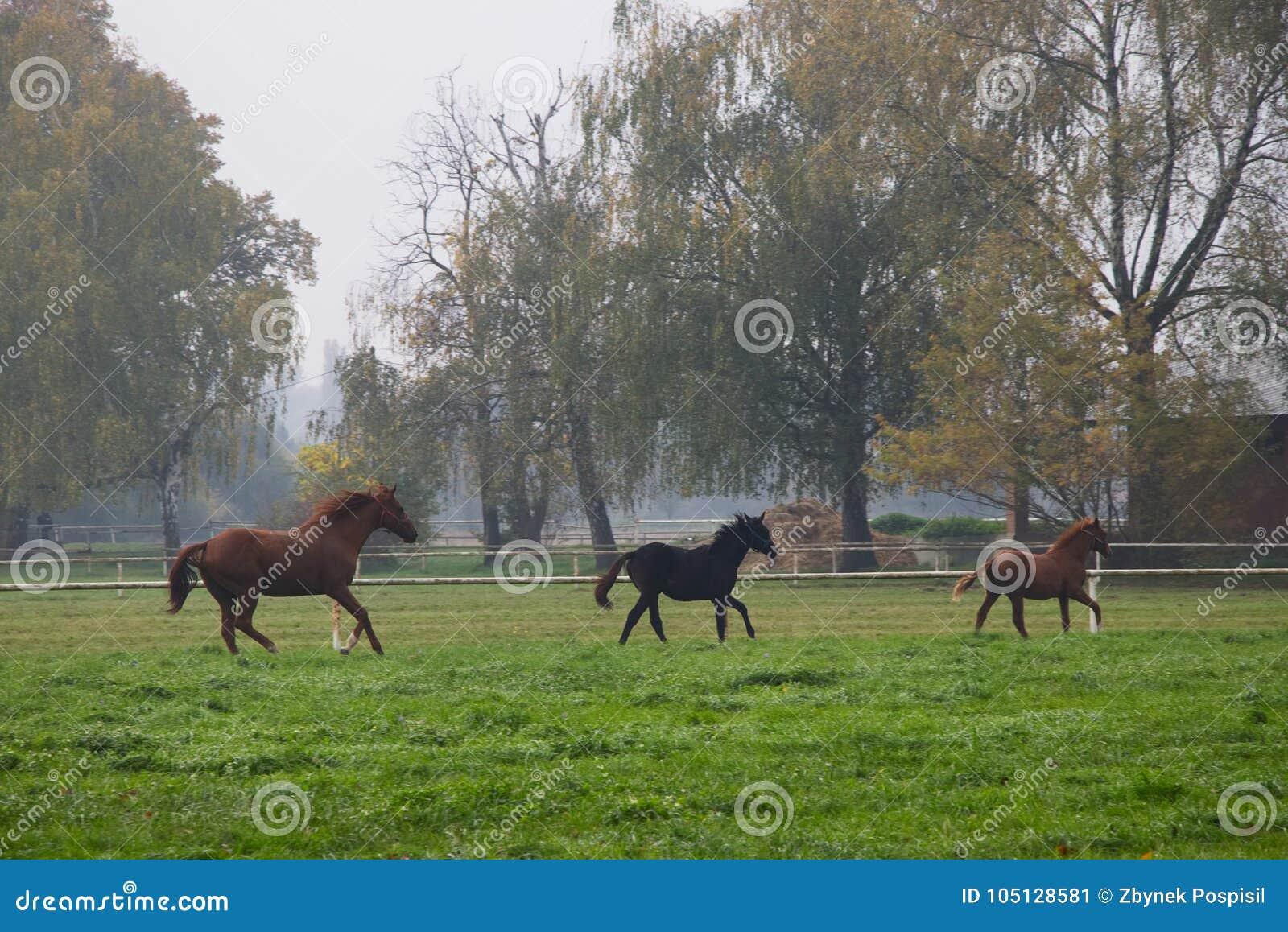 Κοπάδι τρεξίματος των αλόγων στο φθινοπωρινό τοπίο