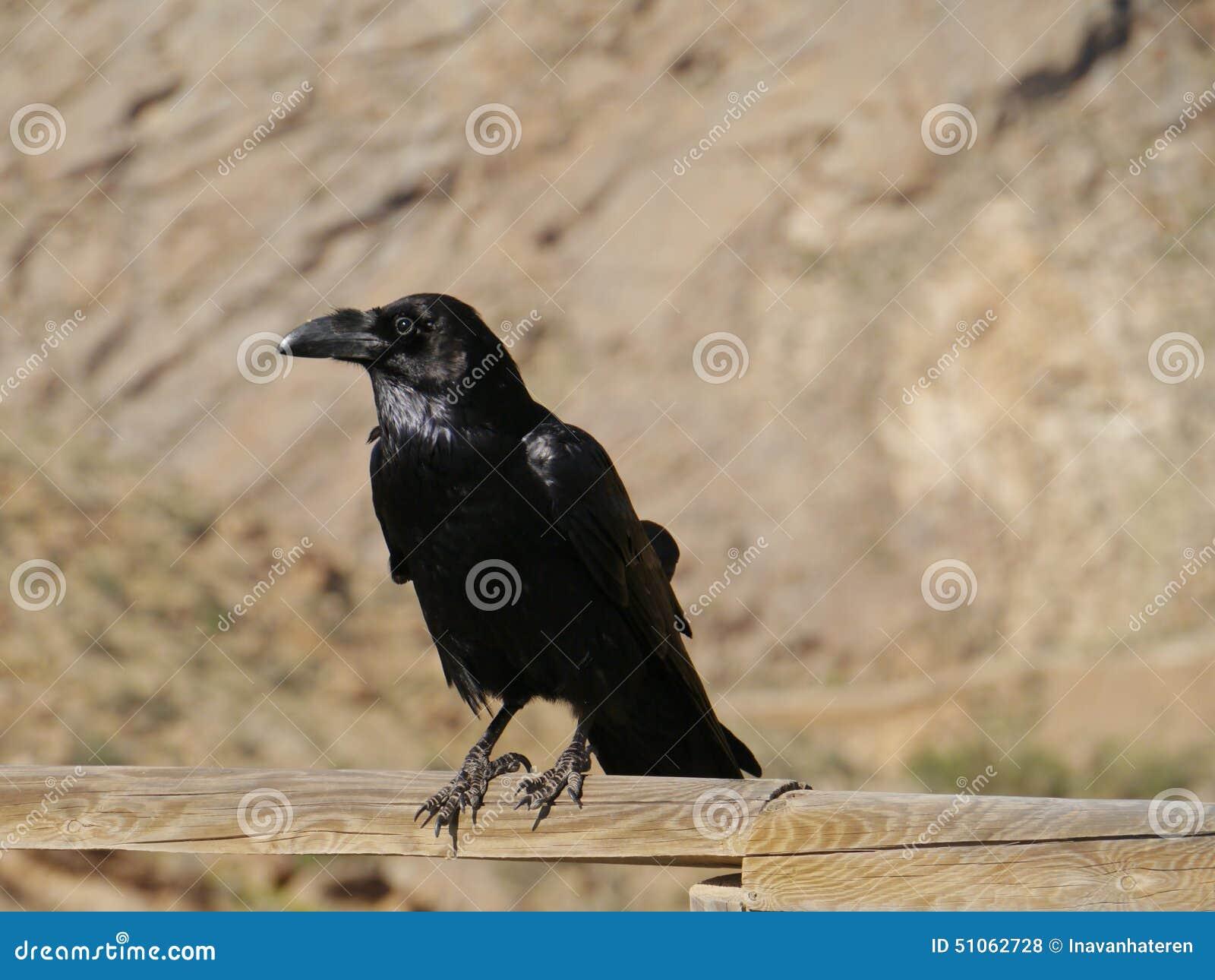 Μεγάλο πουλί ισπανικό