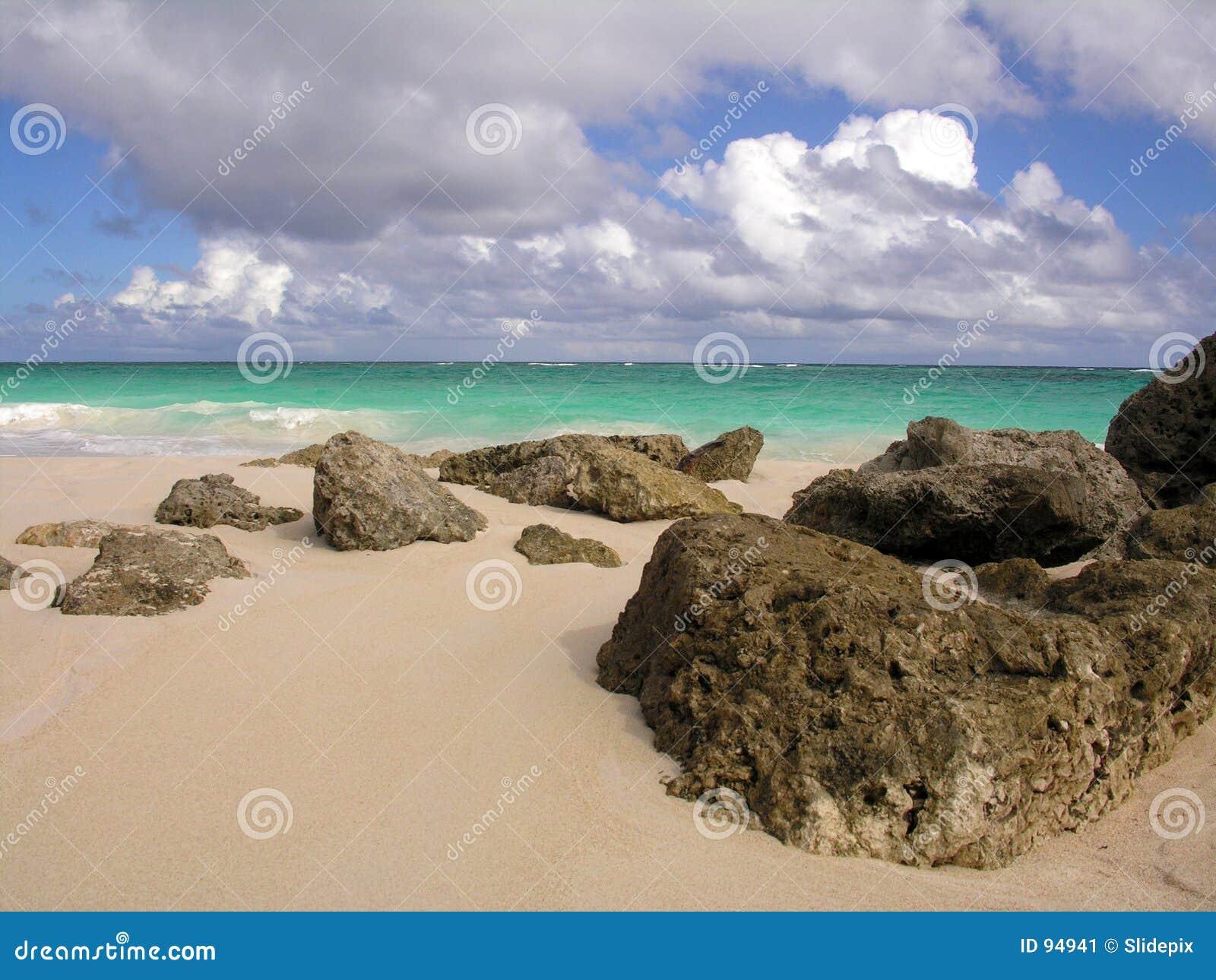 κοράλλι παραλιών