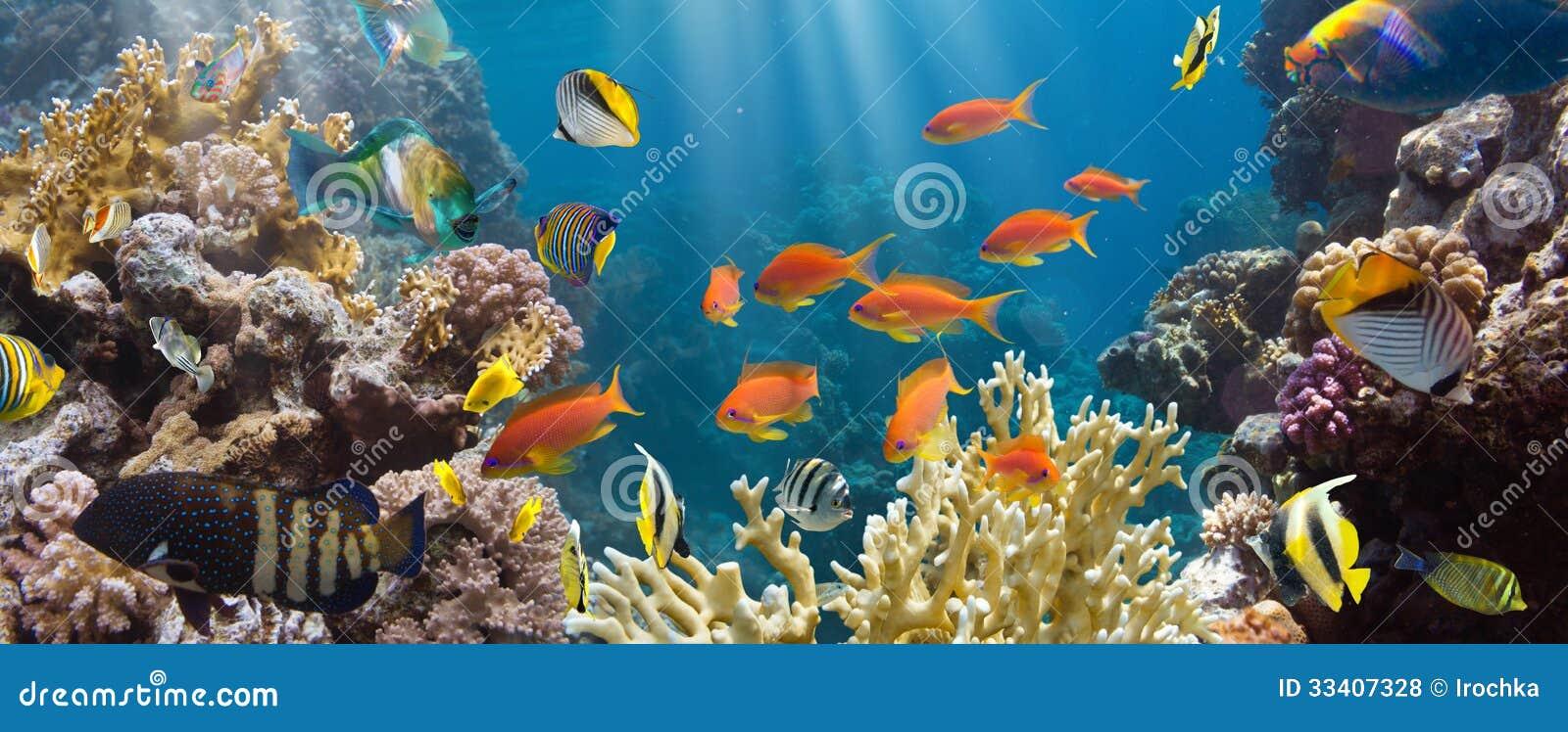 Κοράλλι και ψάρια