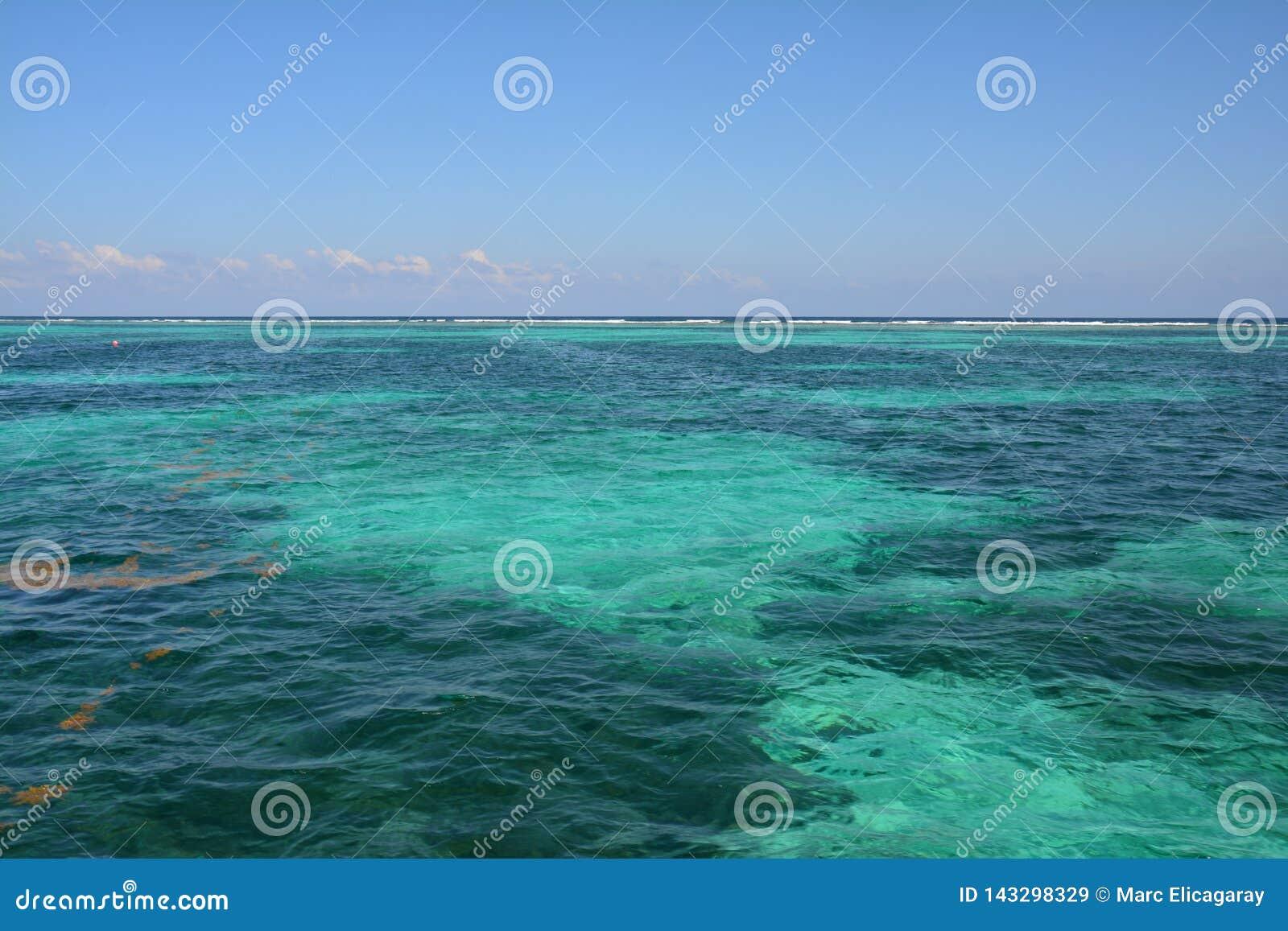 Κοραλλιογενής ύφαλος στο νησί Μπελίζ καλαφατών Caye
