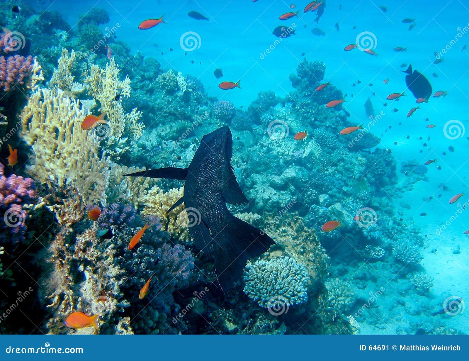 κοραλλιογενής ύφαλος 3