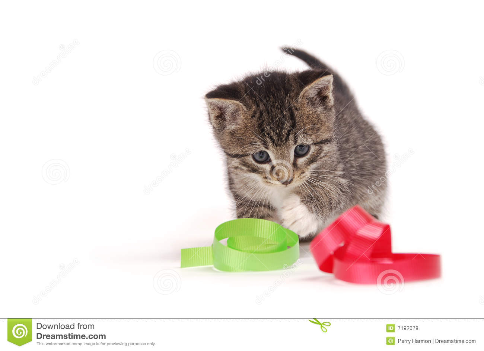 κορδέλλες παιχνιδιού γατακιών