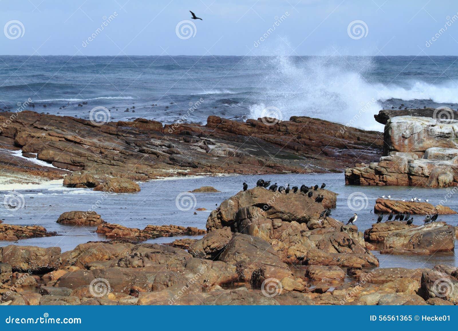 Download Κορμοράνοι στην ακτή του ακρωτηρίου της καλής ελπίδας Στοκ Εικόνα - εικόνα από αφρική, νότος: 56561365