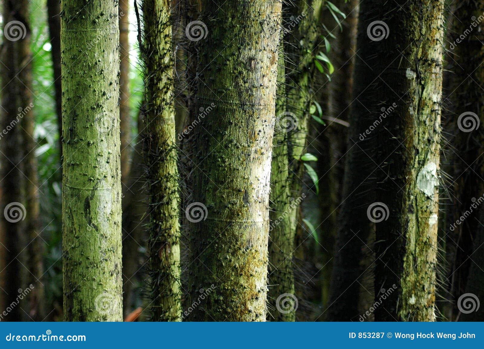 κορμός δέντρων