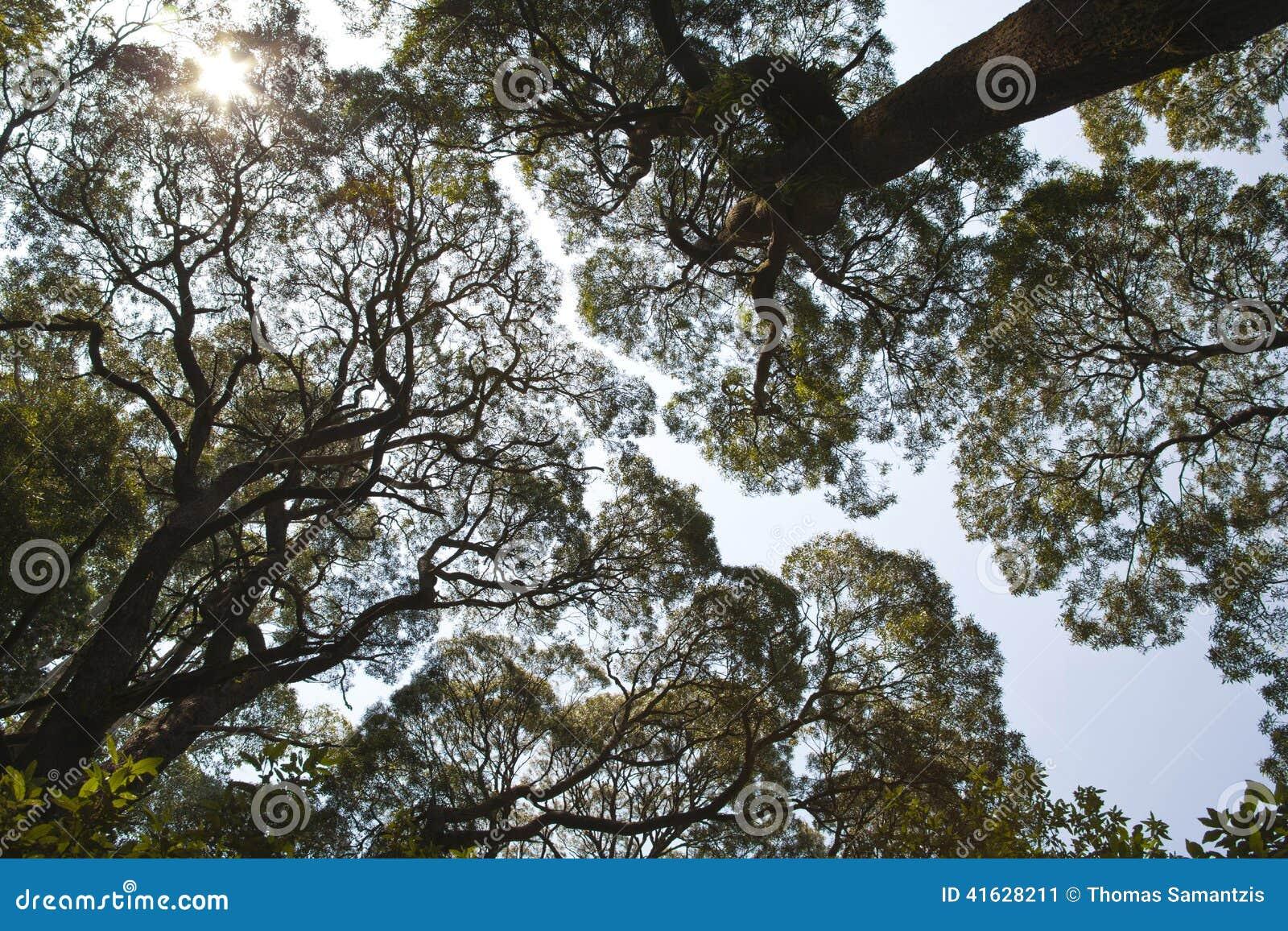 Κορυφές δέντρων