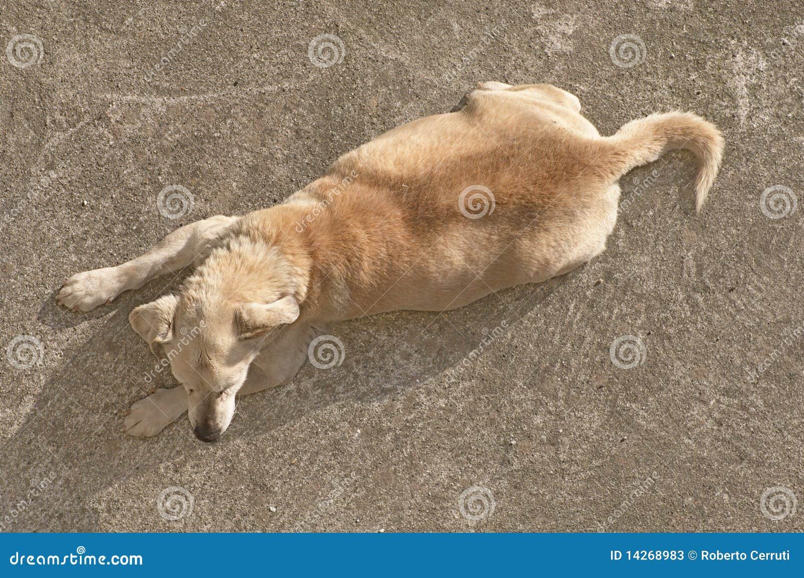 κορυφαία όψη σκυλιών