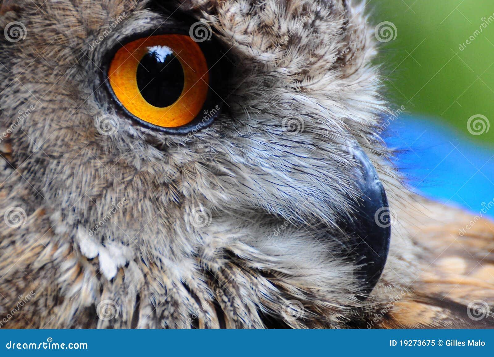 κουκουβάγια ματιών