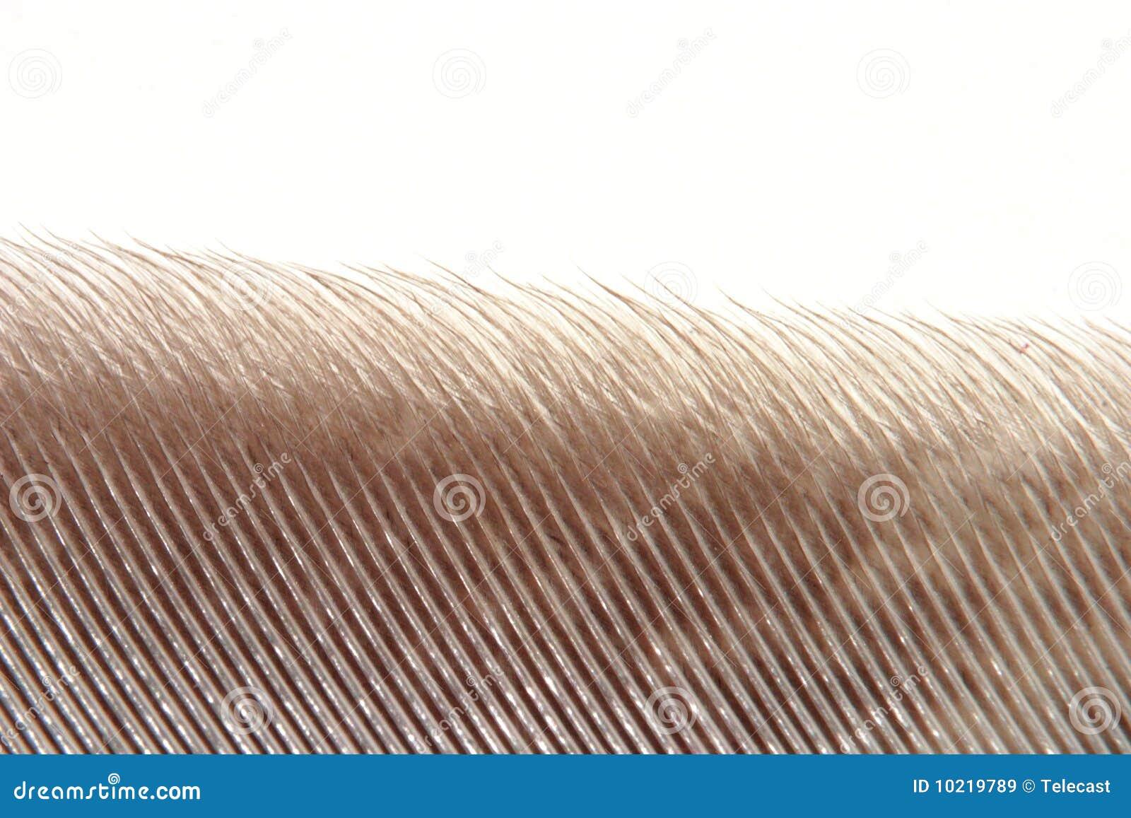 κουκουβάγια φτερών ακρώ&n