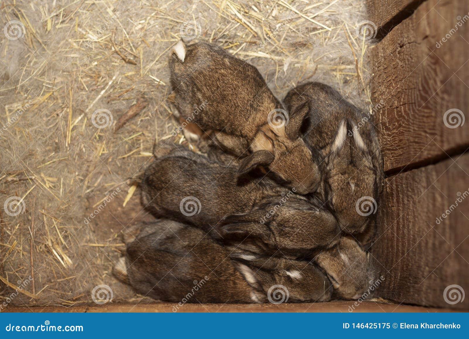 Κουνέλια μωρών σε μια θερμή φωλιά του μαλλιού που πιέζεται ο ένας εναντίον του άλλου