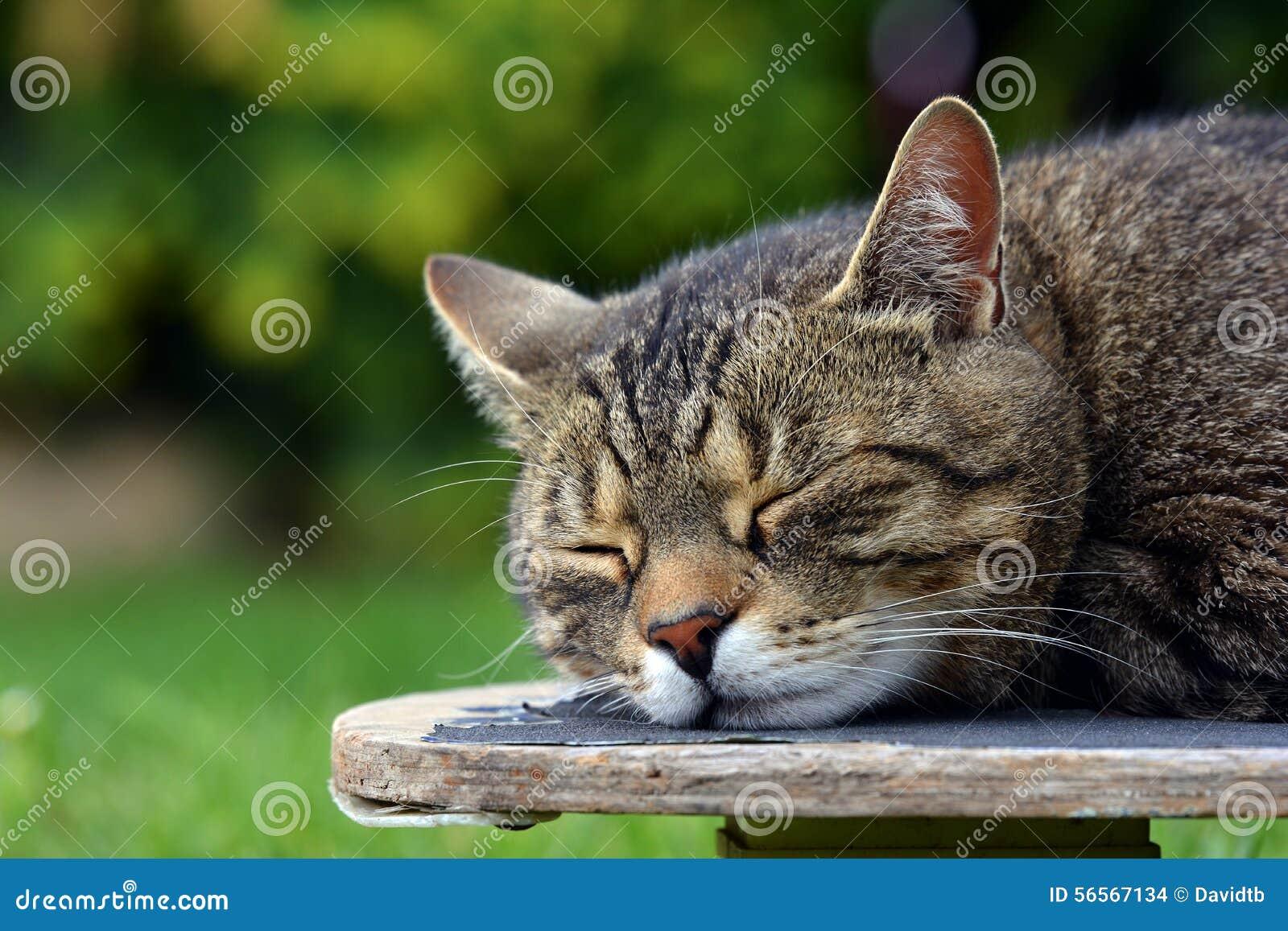 Download Κουρασμένη γάτα skateboard στοκ εικόνες. εικόνα από έκφραση - 56567134