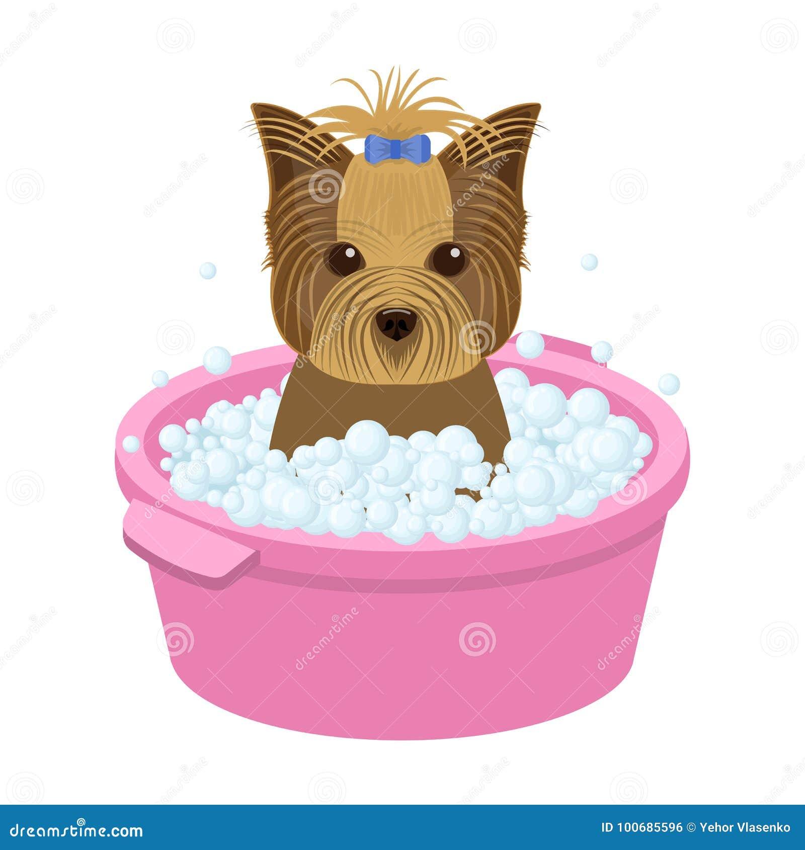 Κουτάβι κατοικίδιων ζώων λουσίματος σε ένα κύπελλο σκυλί, Pet, ενιαίο εικονίδιο προσοχής σκυλιών