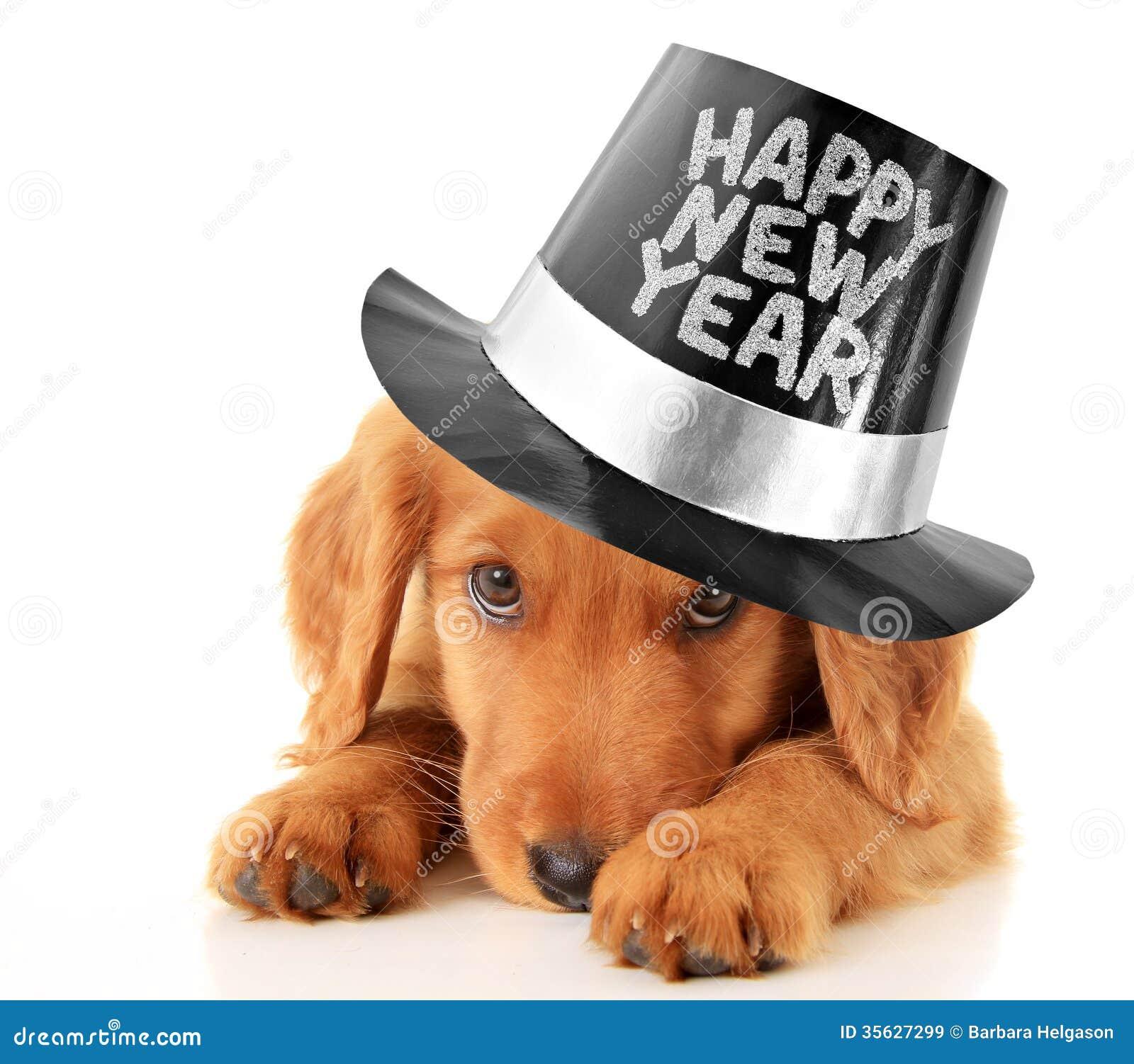 Κουτάβι καλής χρονιάς