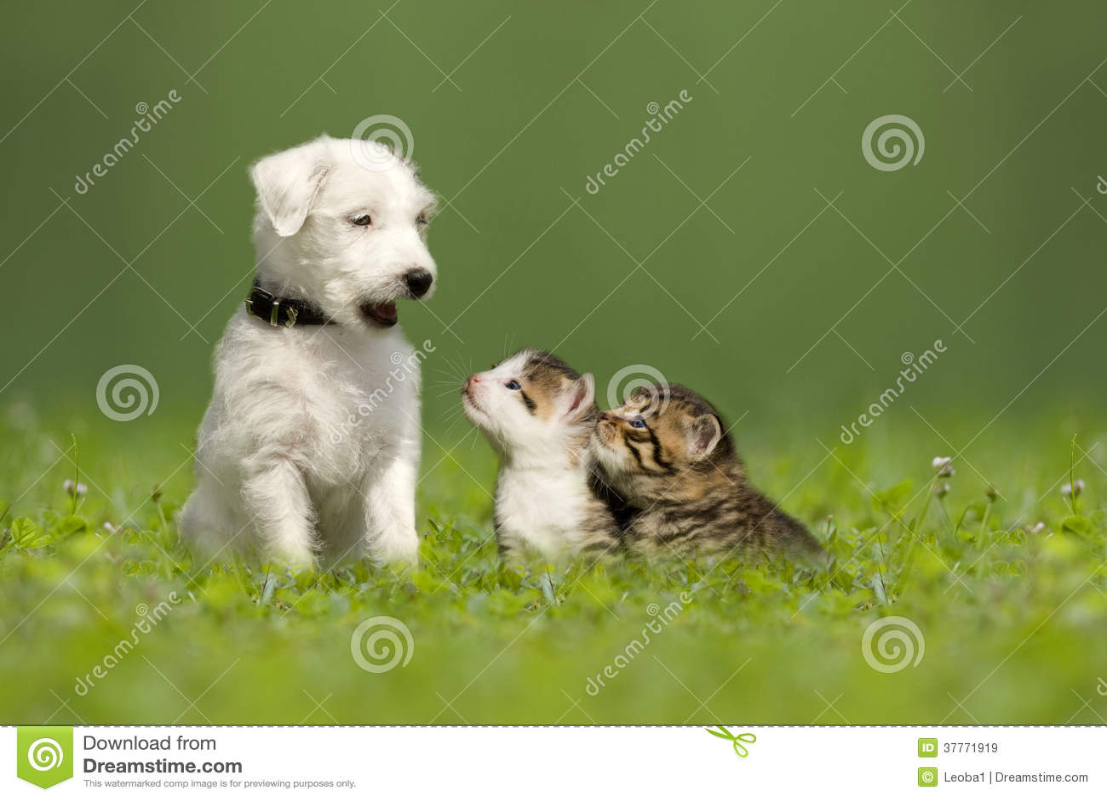Κουτάβι τεριέ του Jack Russell εφημερίων με δύο μικρά γατάκια