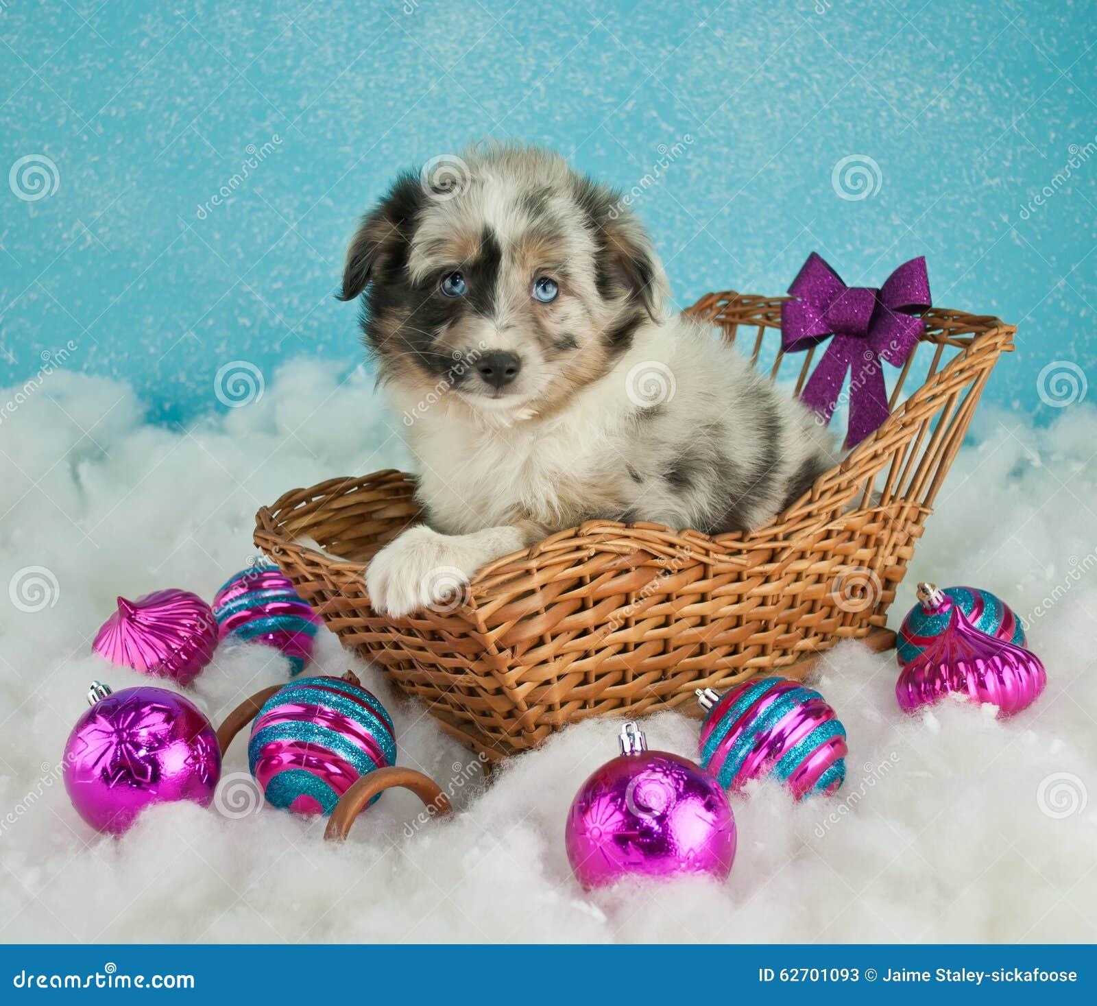 Κουτάβι Χριστουγέννων