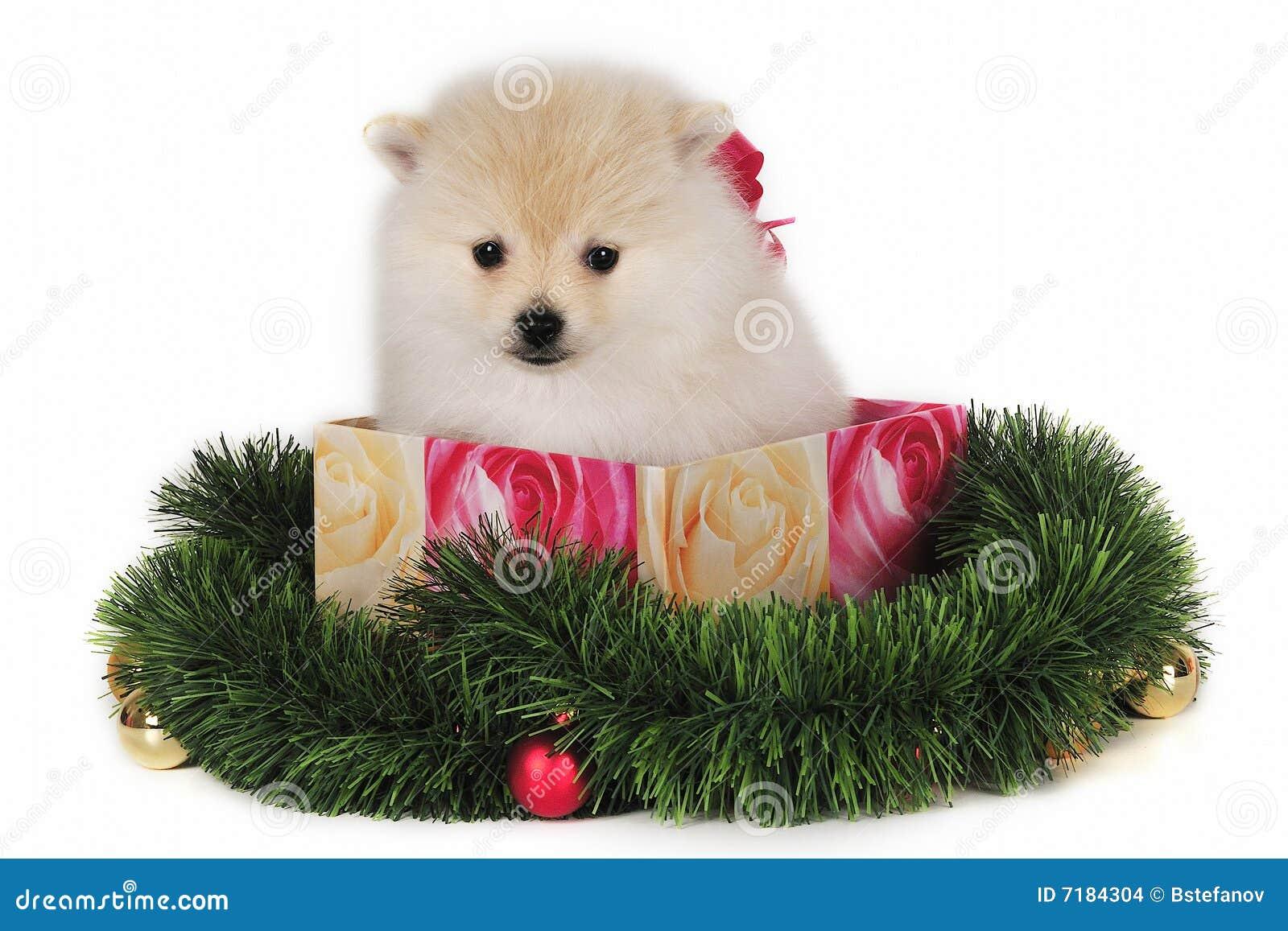 κουτάβι χριστουγεννιάτικου δώρου