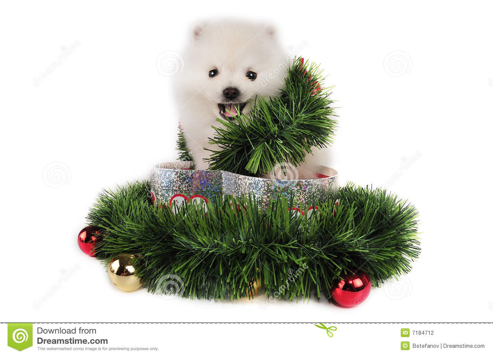 κουτάβι χριστουγεννιάτ&iot