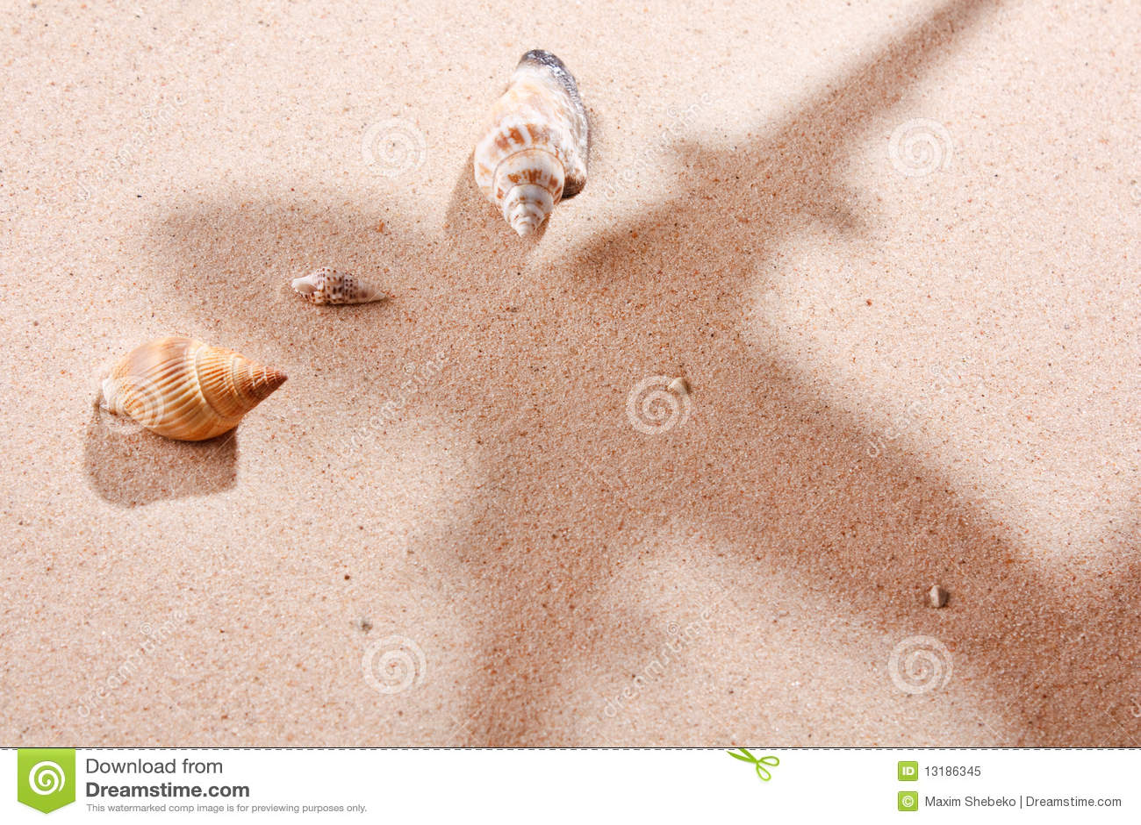 κοχύλια άμμου