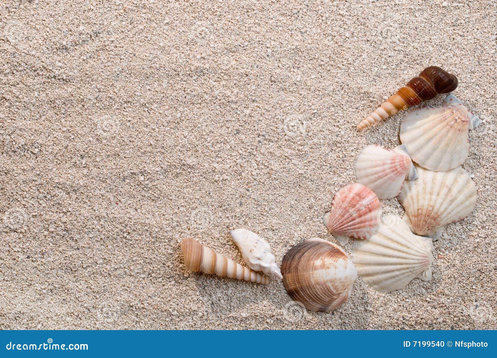 κοχύλια θάλασσας άμμου πλαισίων