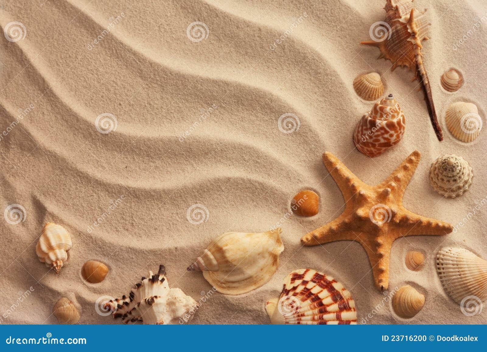 Στοκ εικόνες: κοχύλια θάλασσας άμμου