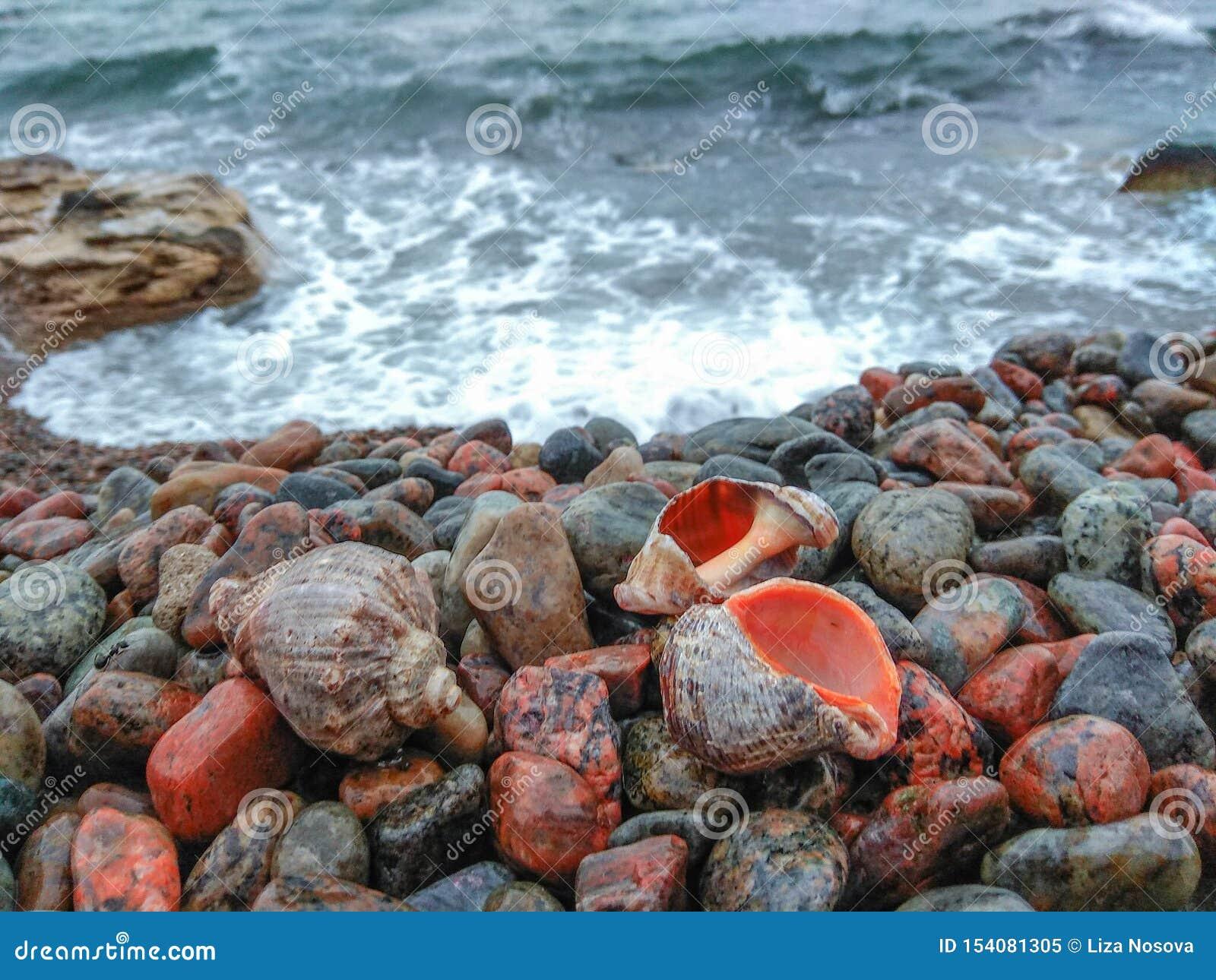 Κοχύλια θάλασσας θαλασσίως στα χαλίκια