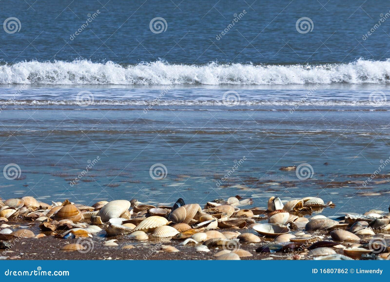 κοχύλια θάλασσας