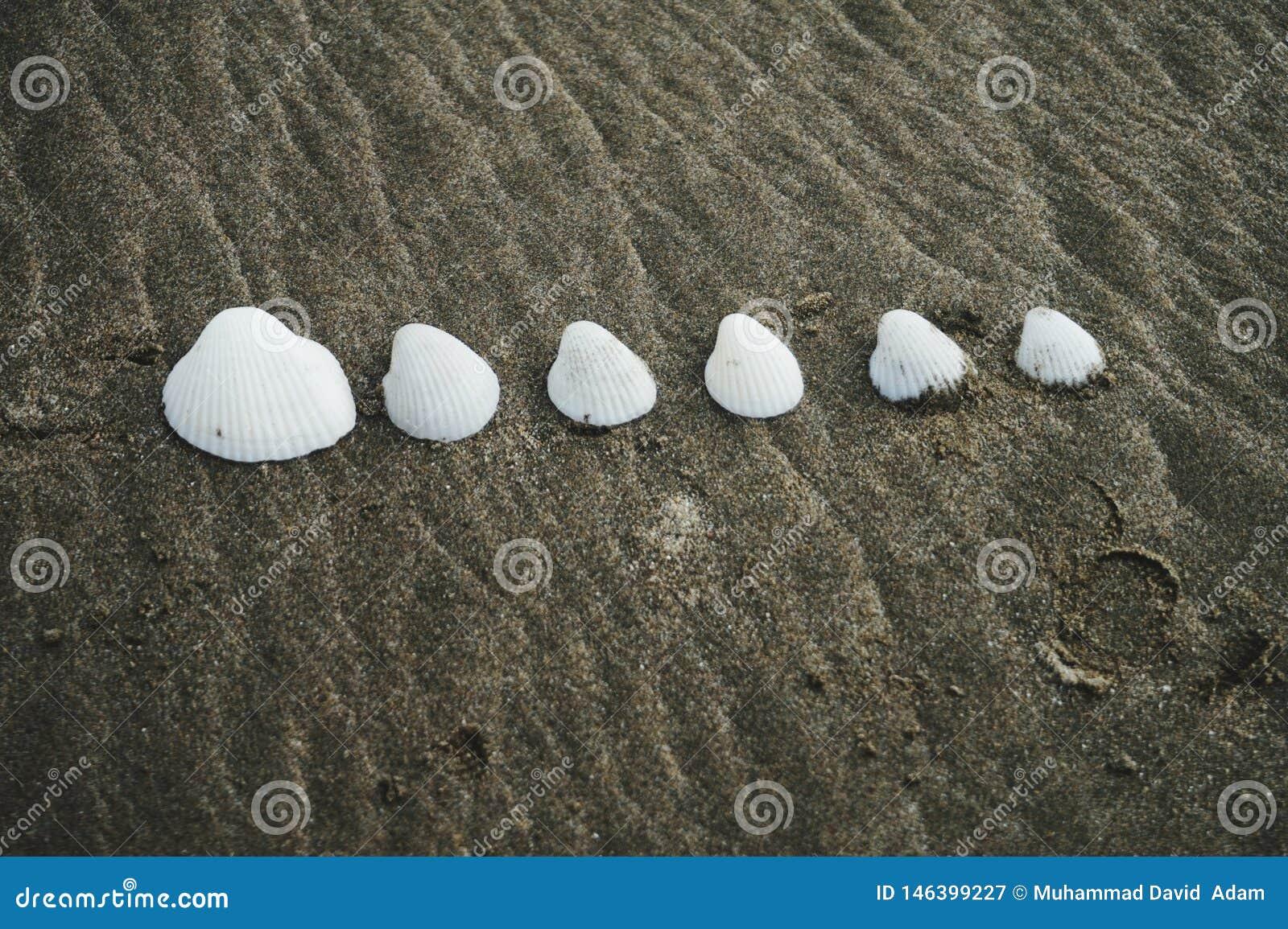 Κοχύλια στην παραλία