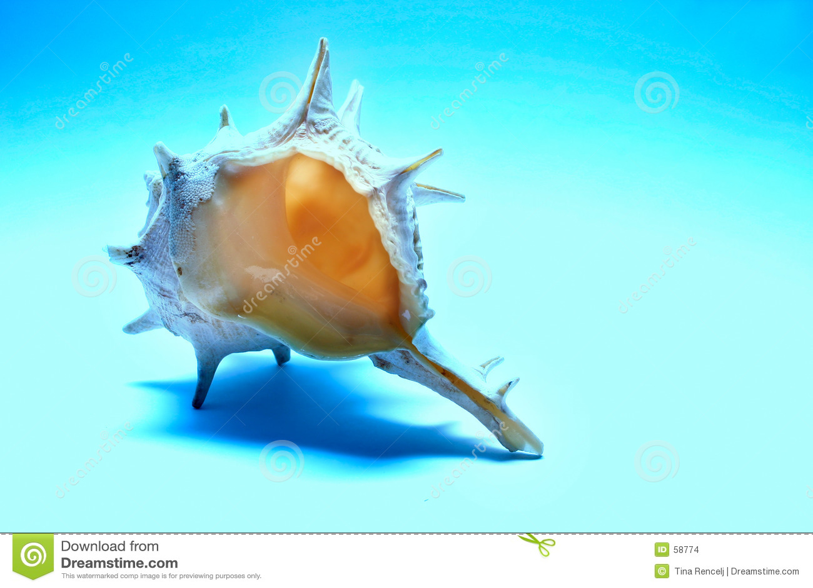 Download κοχύλι θάλασσας στοκ εικόνες. εικόνα από κοράλλι, ναυτικό - 58774