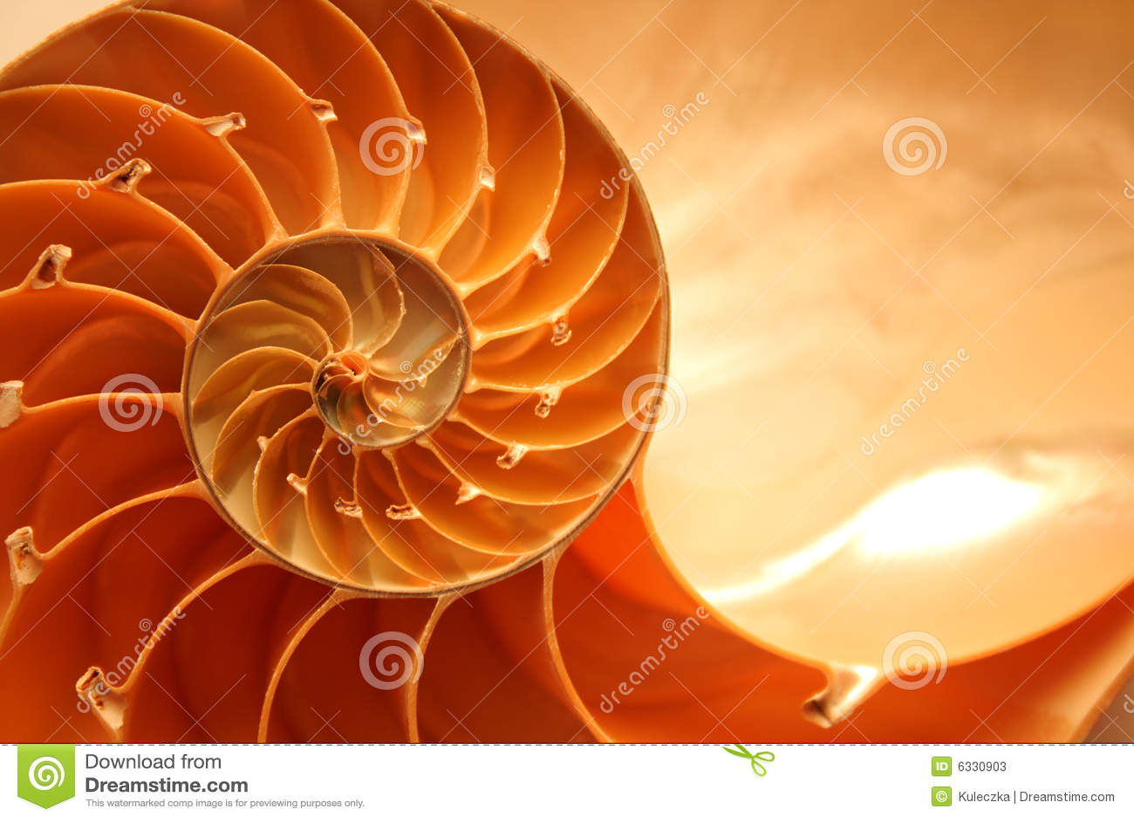 κοχύλι nautilus