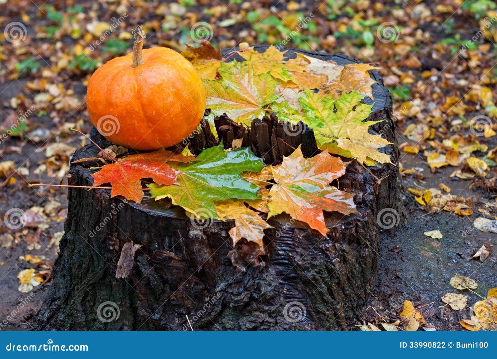 Κολοκύθα και φύλλα σφενδάμου στο δάσος φθινοπώρου στο κολόβωμα