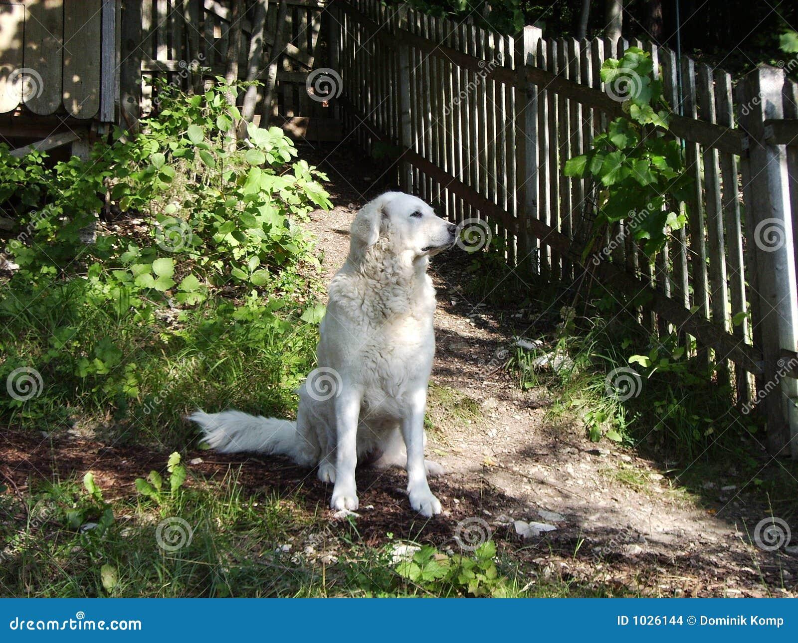 κράτηση φρουράς σκυλιών