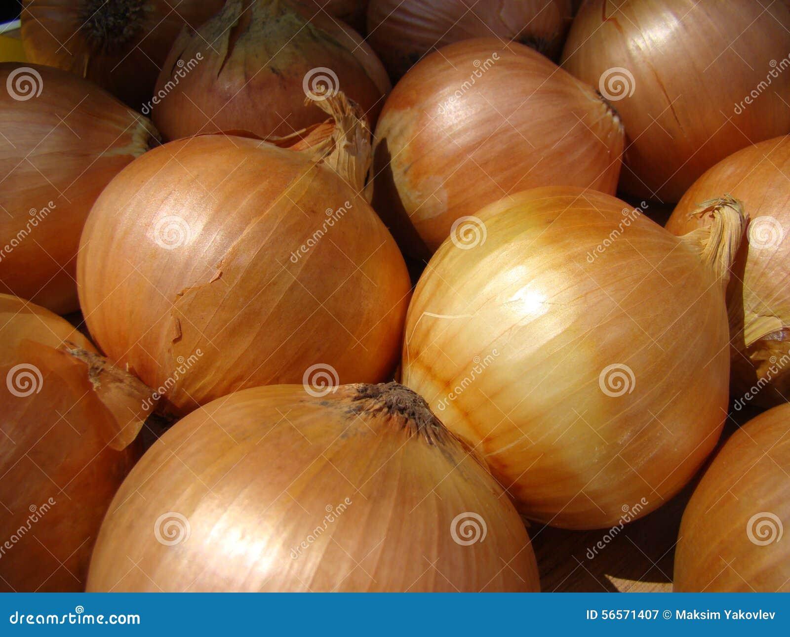 Download Κρεμμύδι στοκ εικόνα. εικόνα από καρύκευμα, οίστρο, κρεμμύδι - 56571407